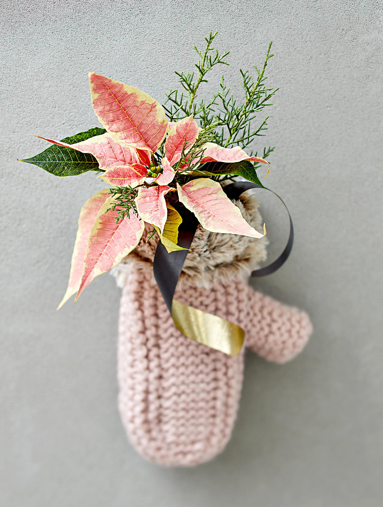 Pink poinsettia in knitted mitten