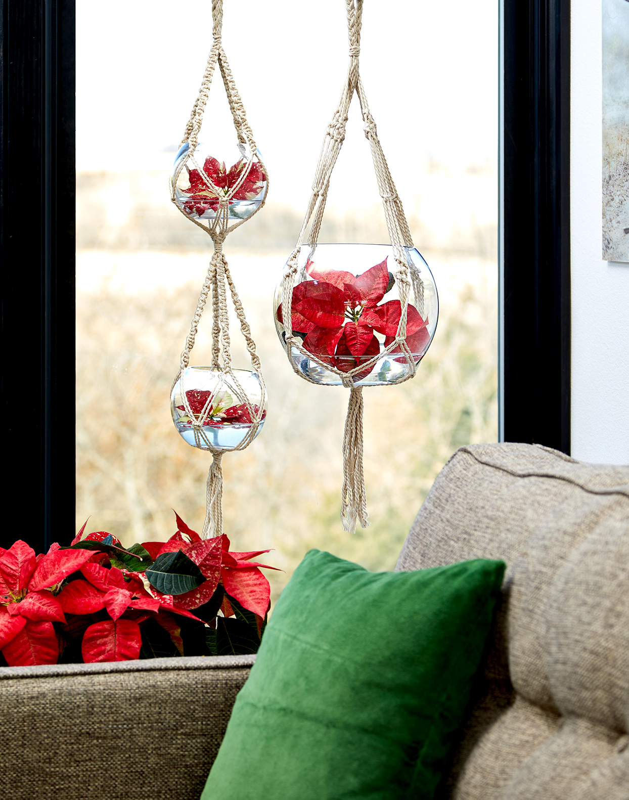 Poinsettias in hanging glass planters