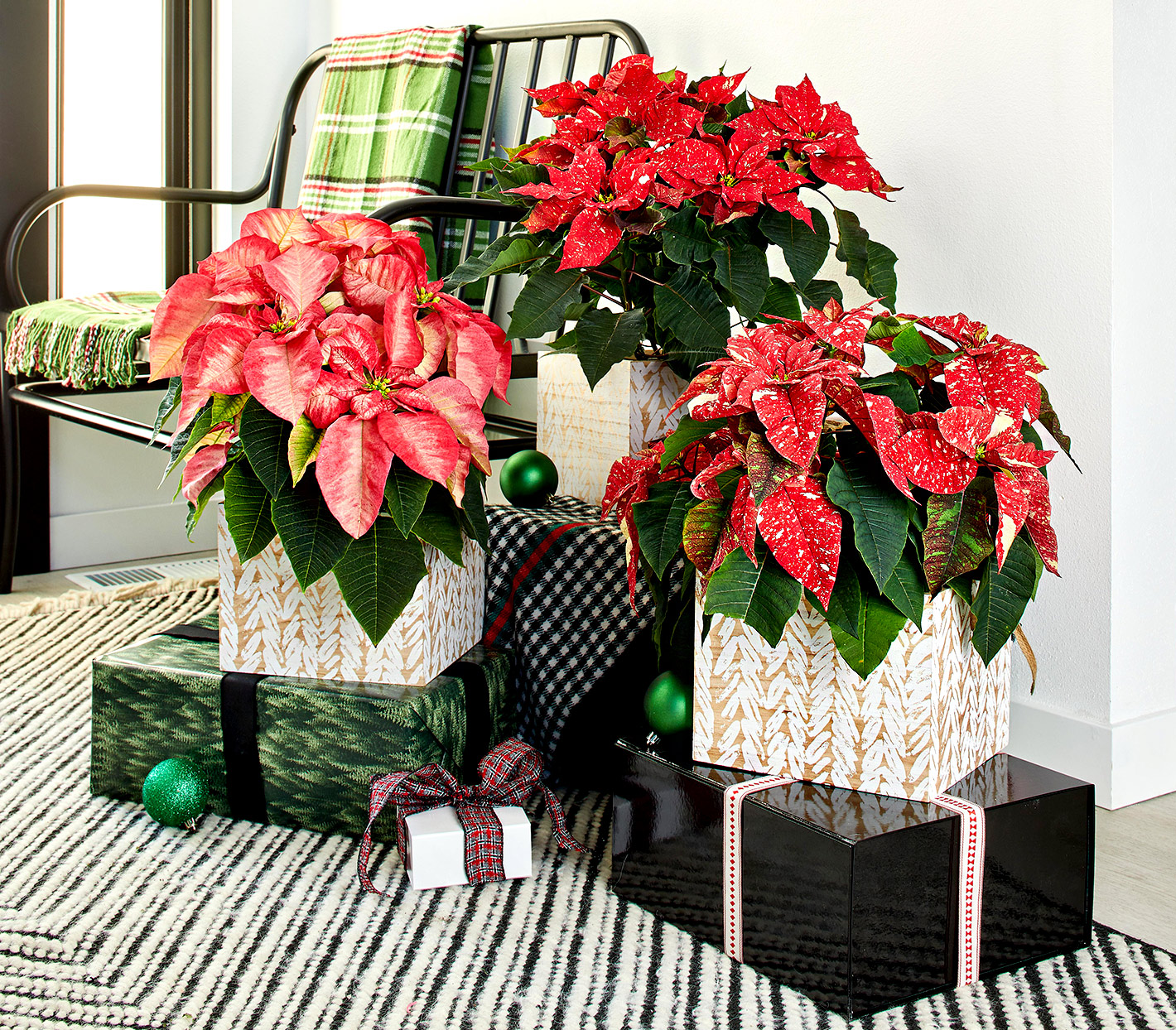 Poinsettias on top of wrapped gifts
