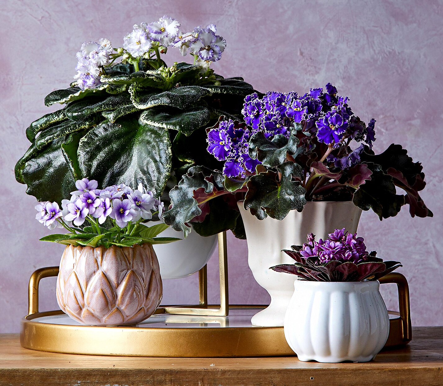 22 Beautiful Blooming Houseplants Better Homes Gardens