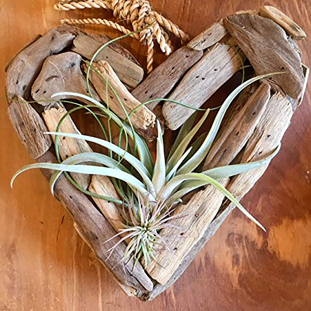 Driftwood Heart With Air Plants