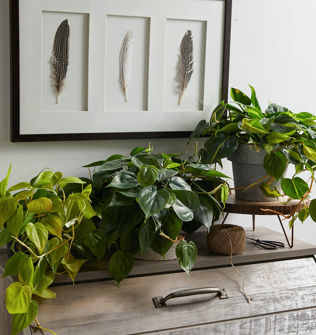 houseplants on rustic home cabinet