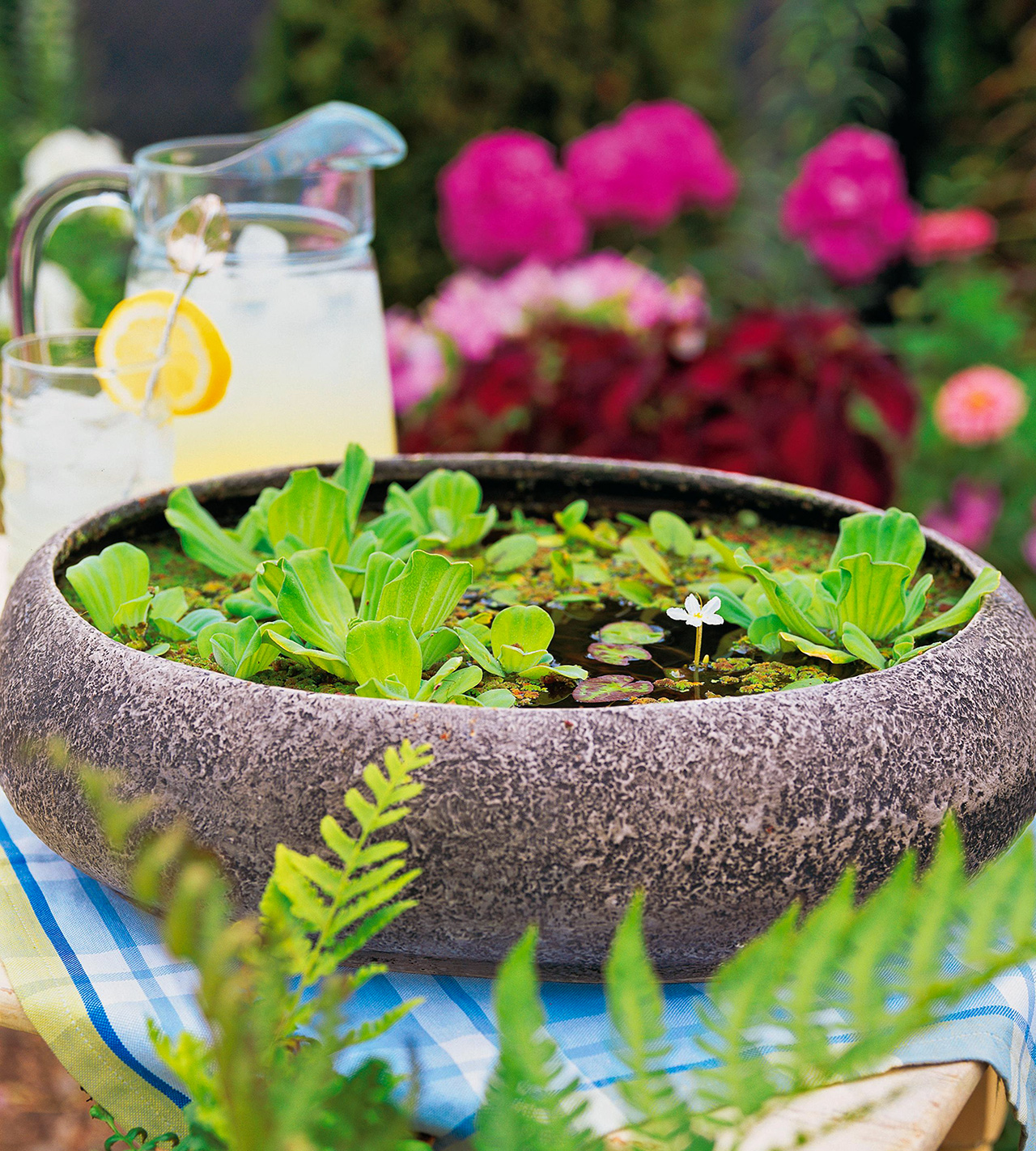 Simple Tabletop Water Garden