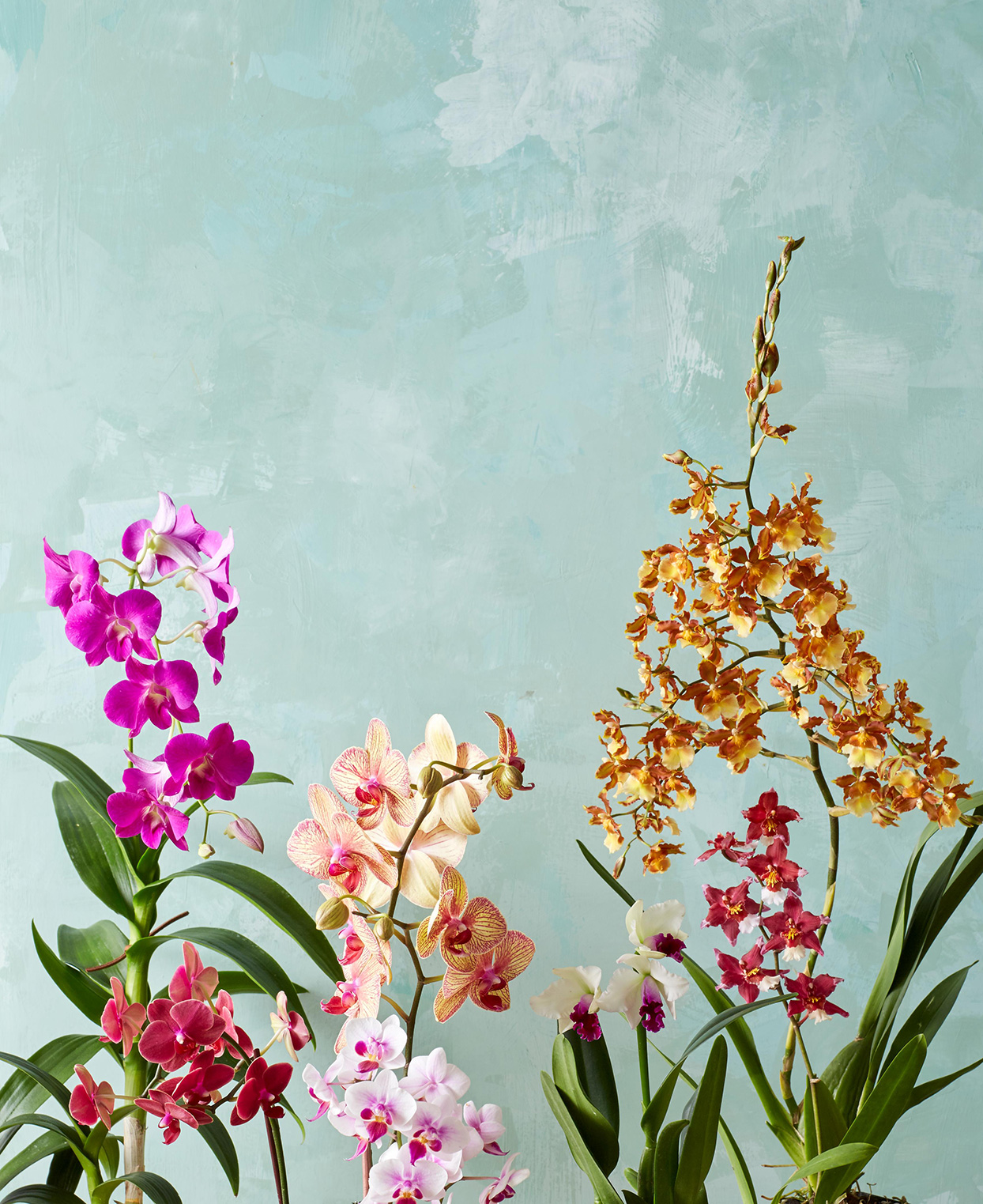 various colorful orchids