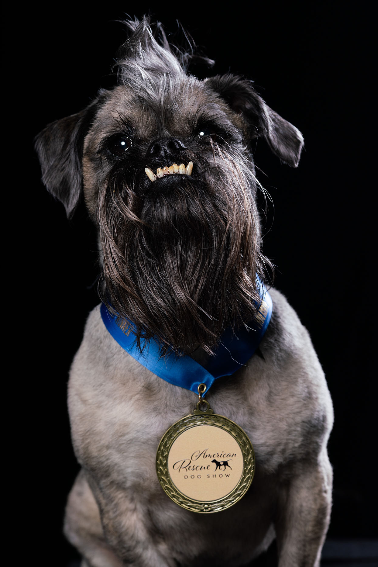 grey dog with an underbite wearing a dog show medal