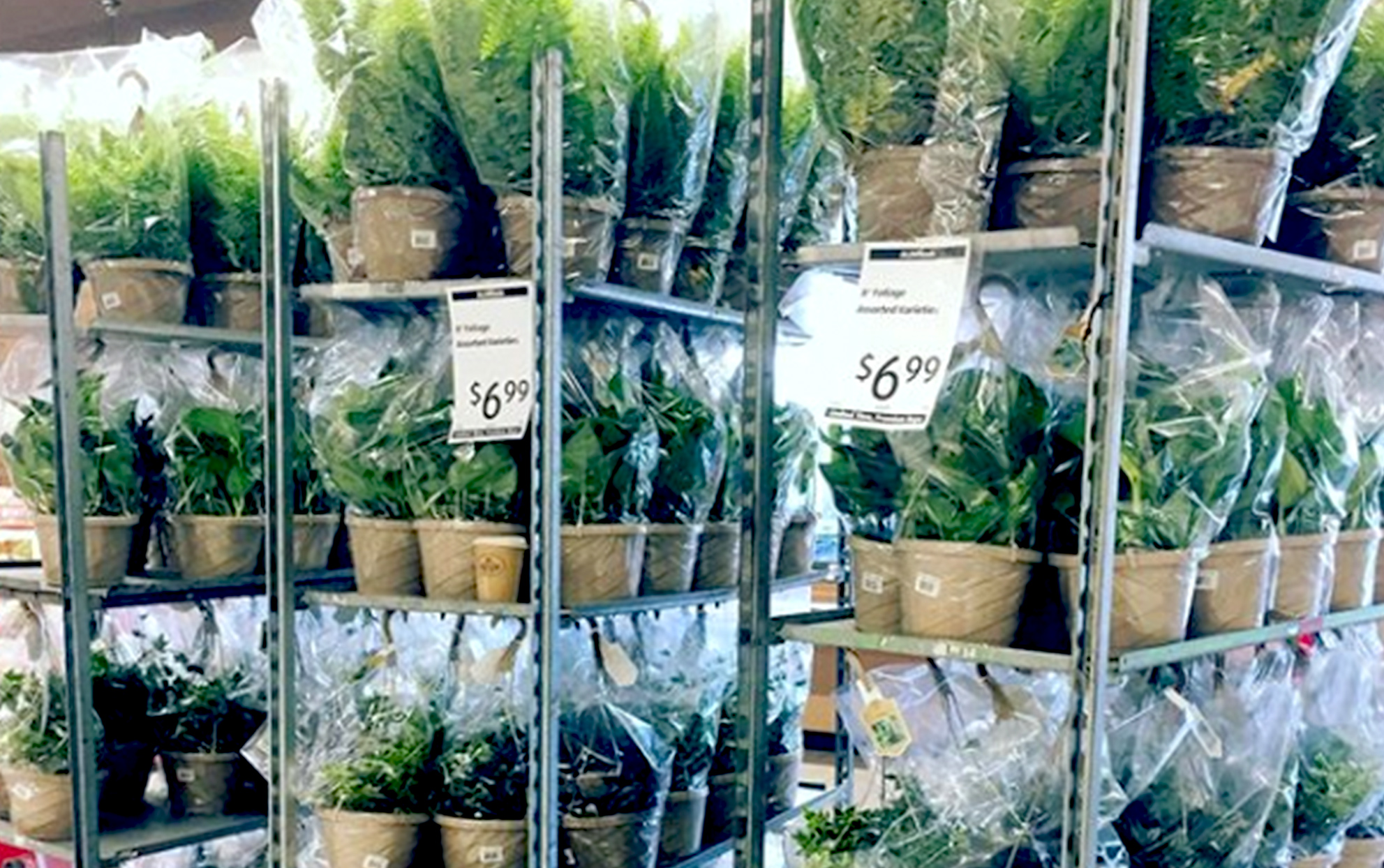 Carts of plants for sale at an Aldi's store