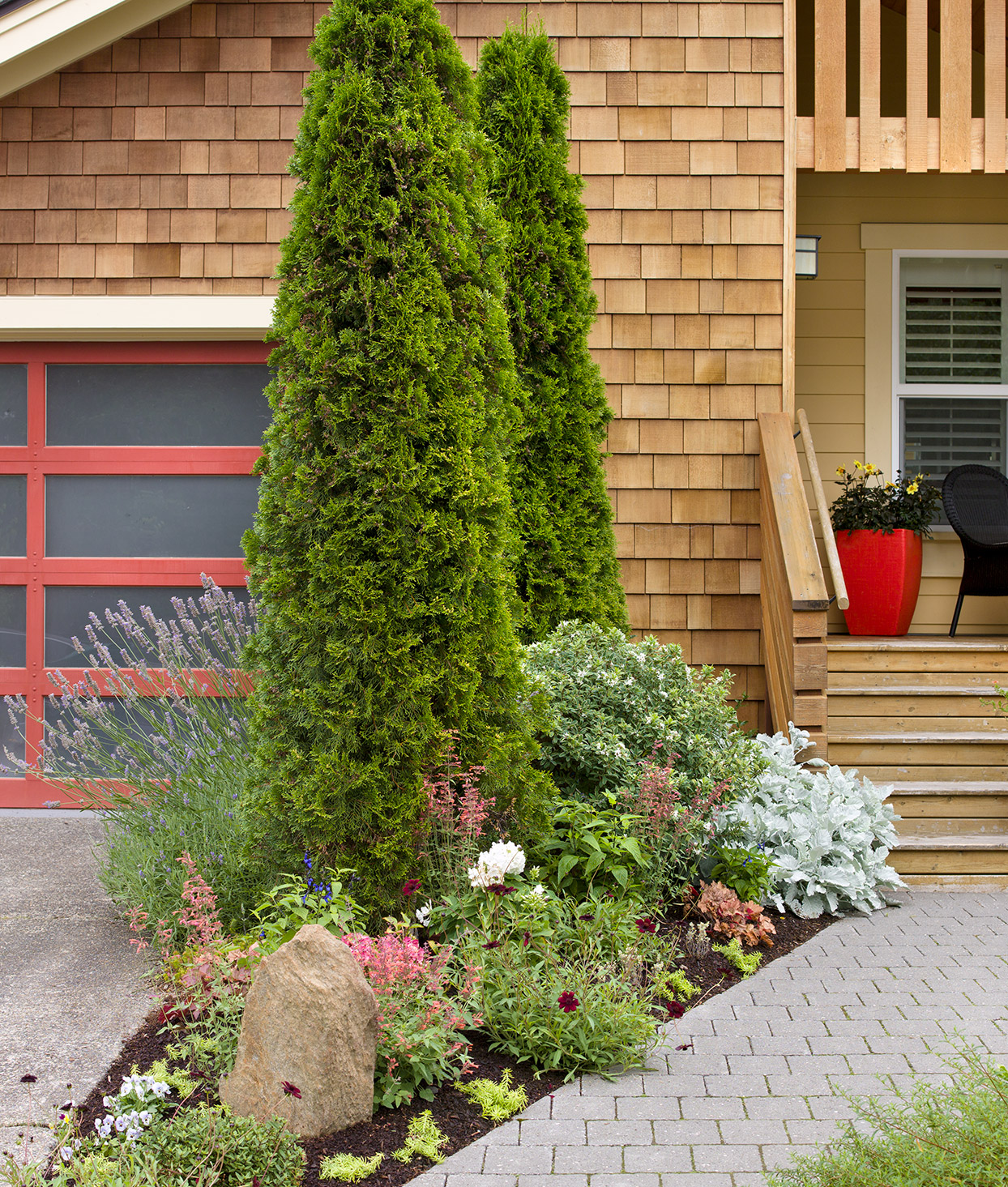 Fast-Growing Evergreen Trees to Quickly Transform Your Landscape