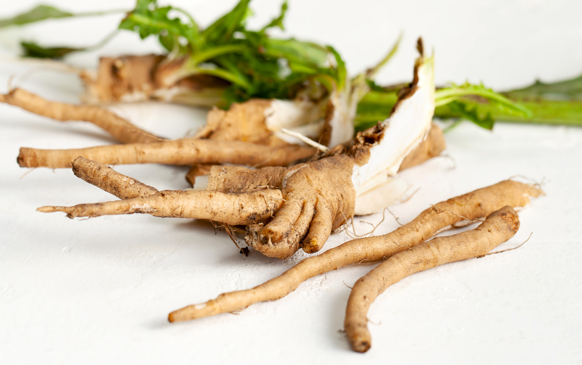 Crude chicory root on a white surface