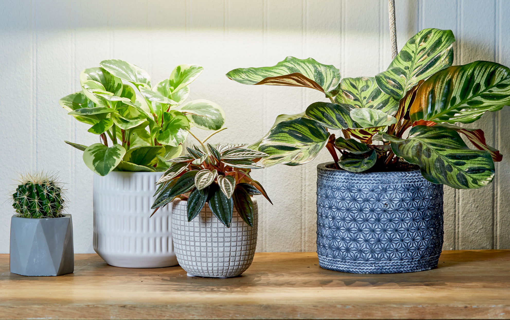 These 6 Popular Houseplants Each Have Special Meanings Behind Them