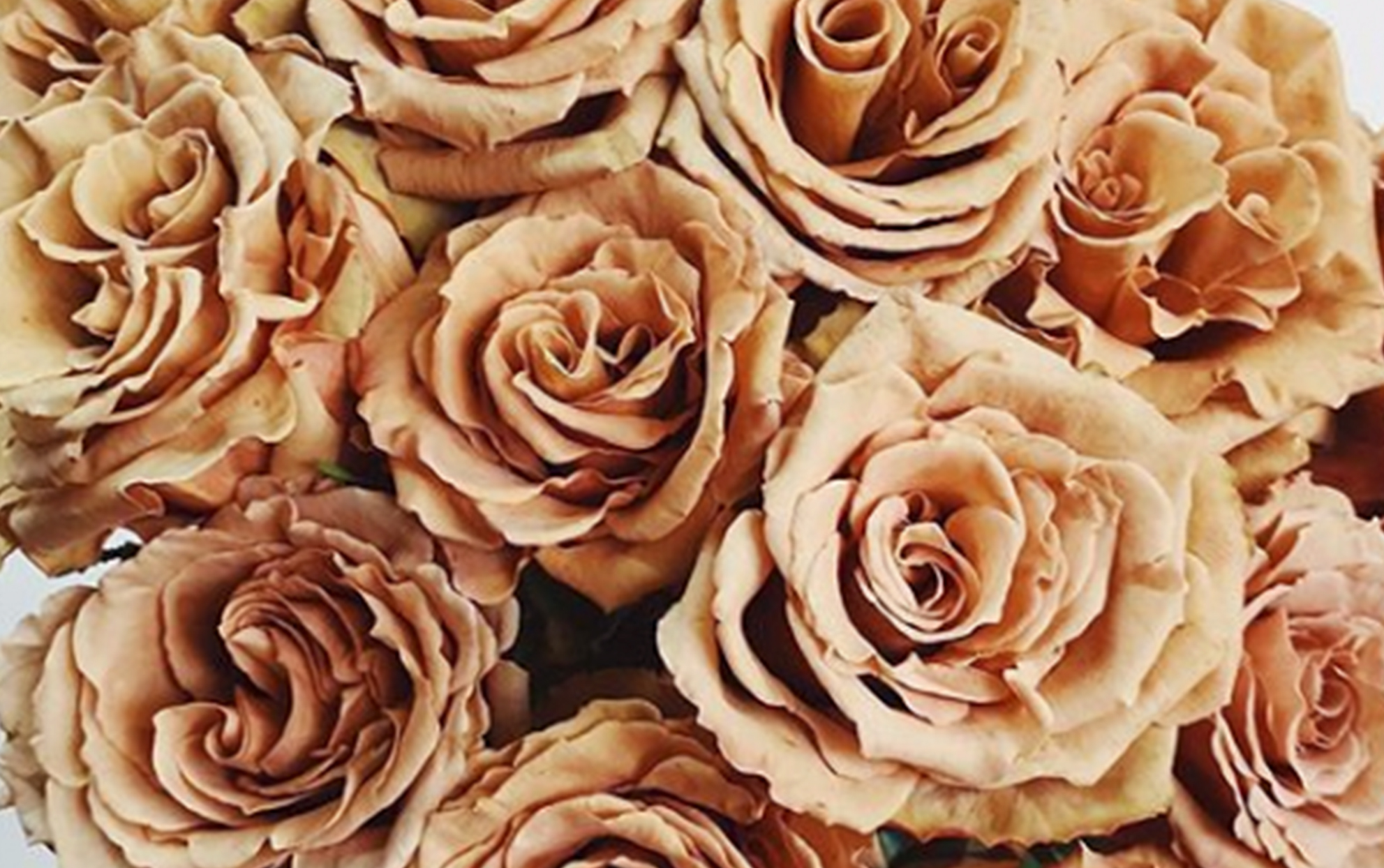 'Toffee' Roses Are So Popular, Some Florists Can Barely Keep Them in Stock