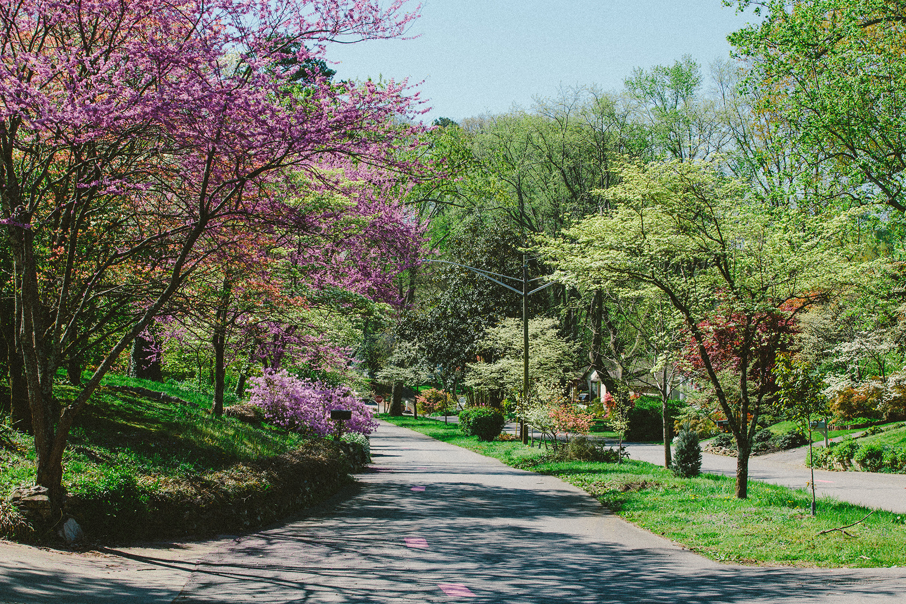 dogwoods trails in spring