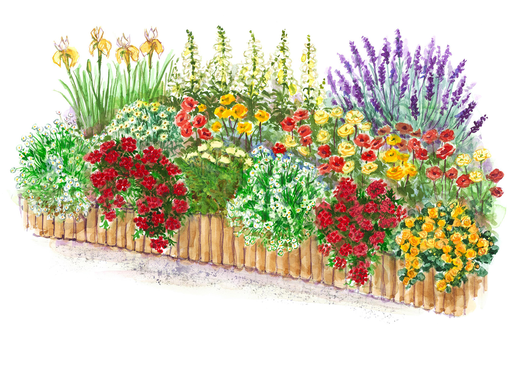 Hot-Color Flower Garden Plan