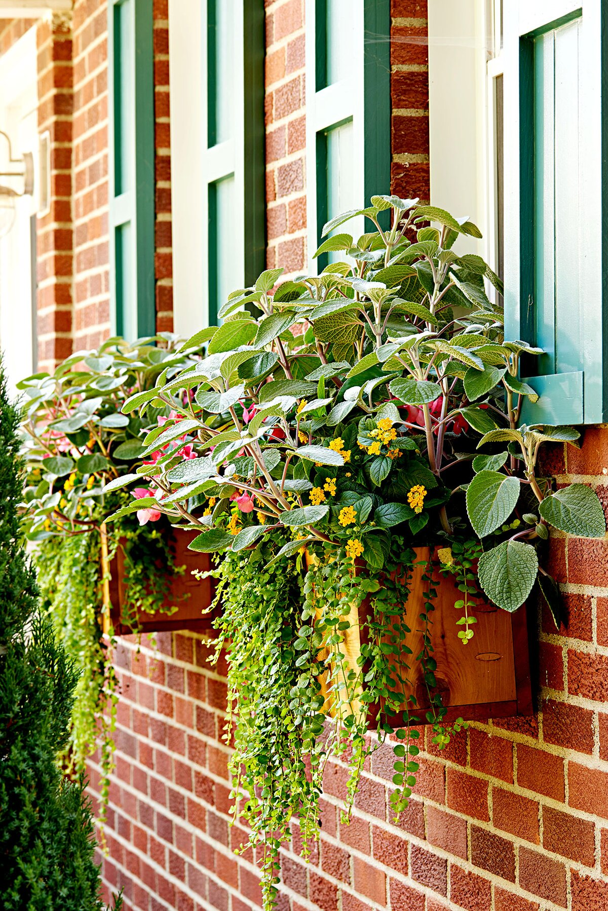 Window Curb Appeal Tips