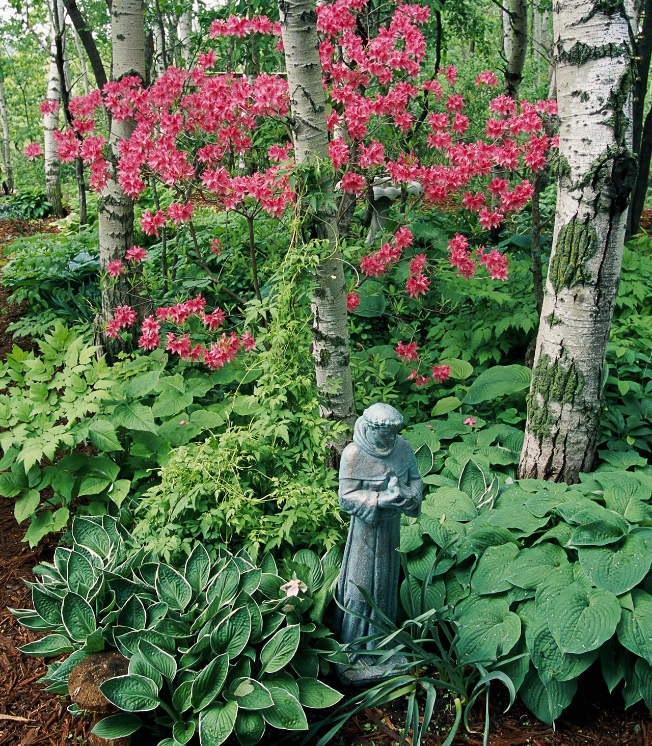 rhododendron and azalea garden with statue