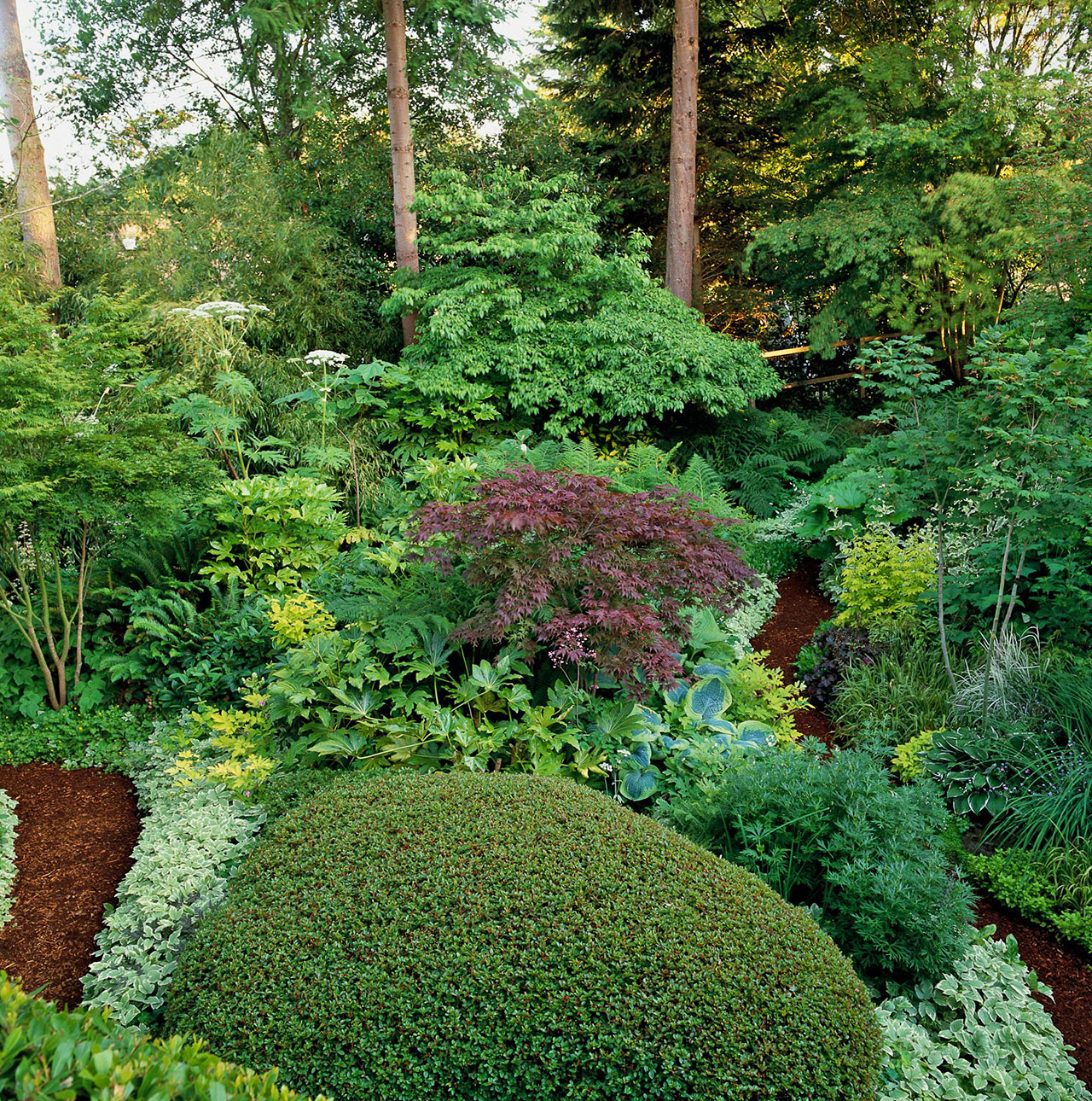 shade garden with mulched path