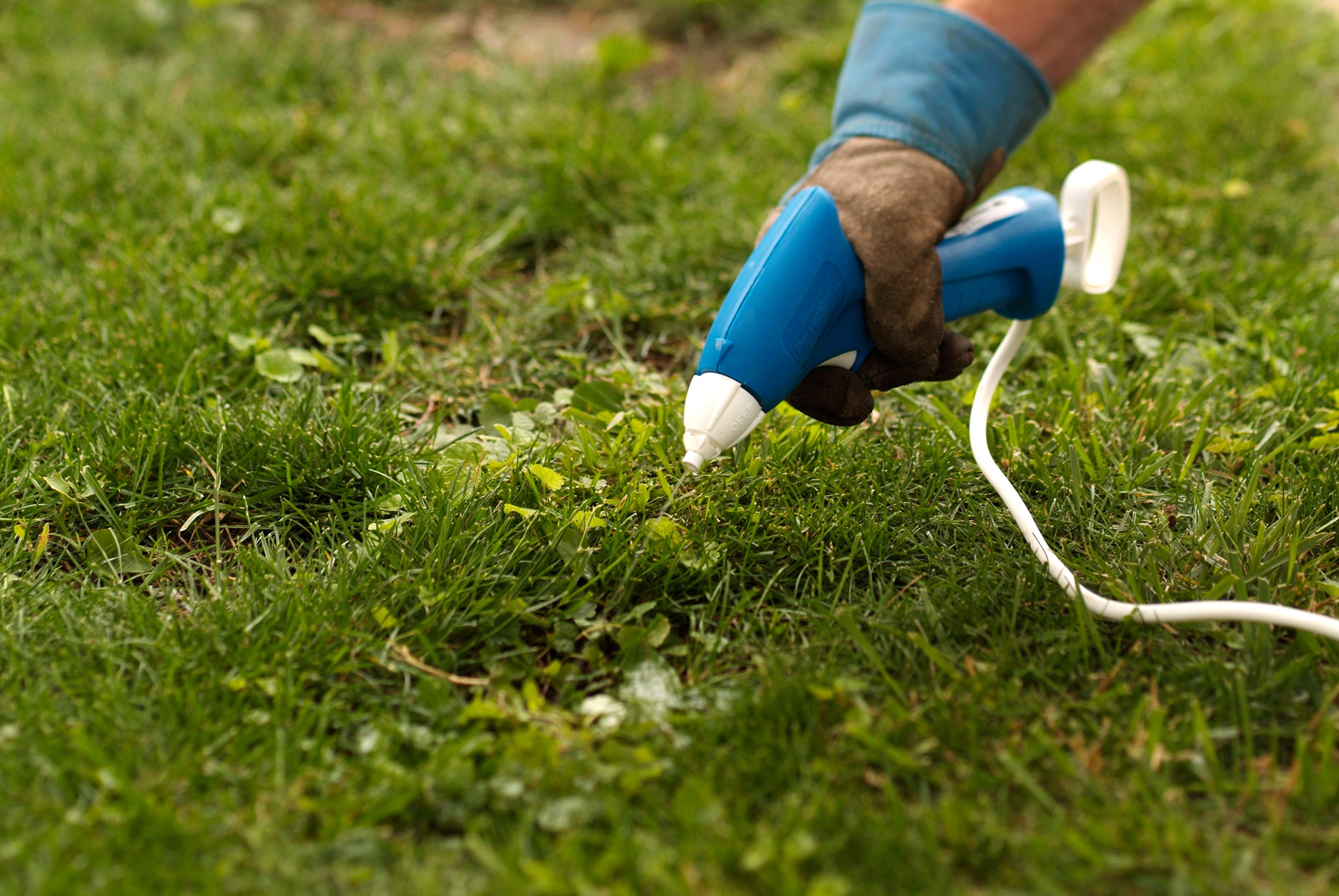 spray lawn with herbicide