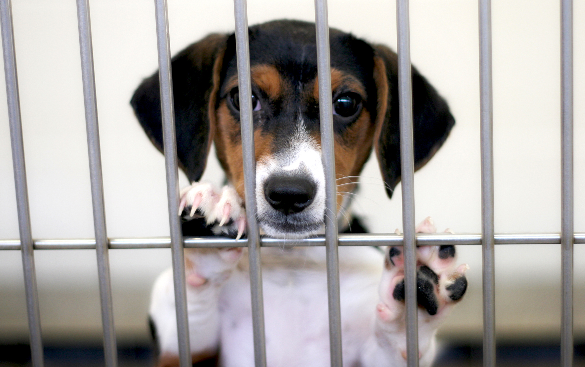 Puppy looking out from it's cage in a dog shelter
