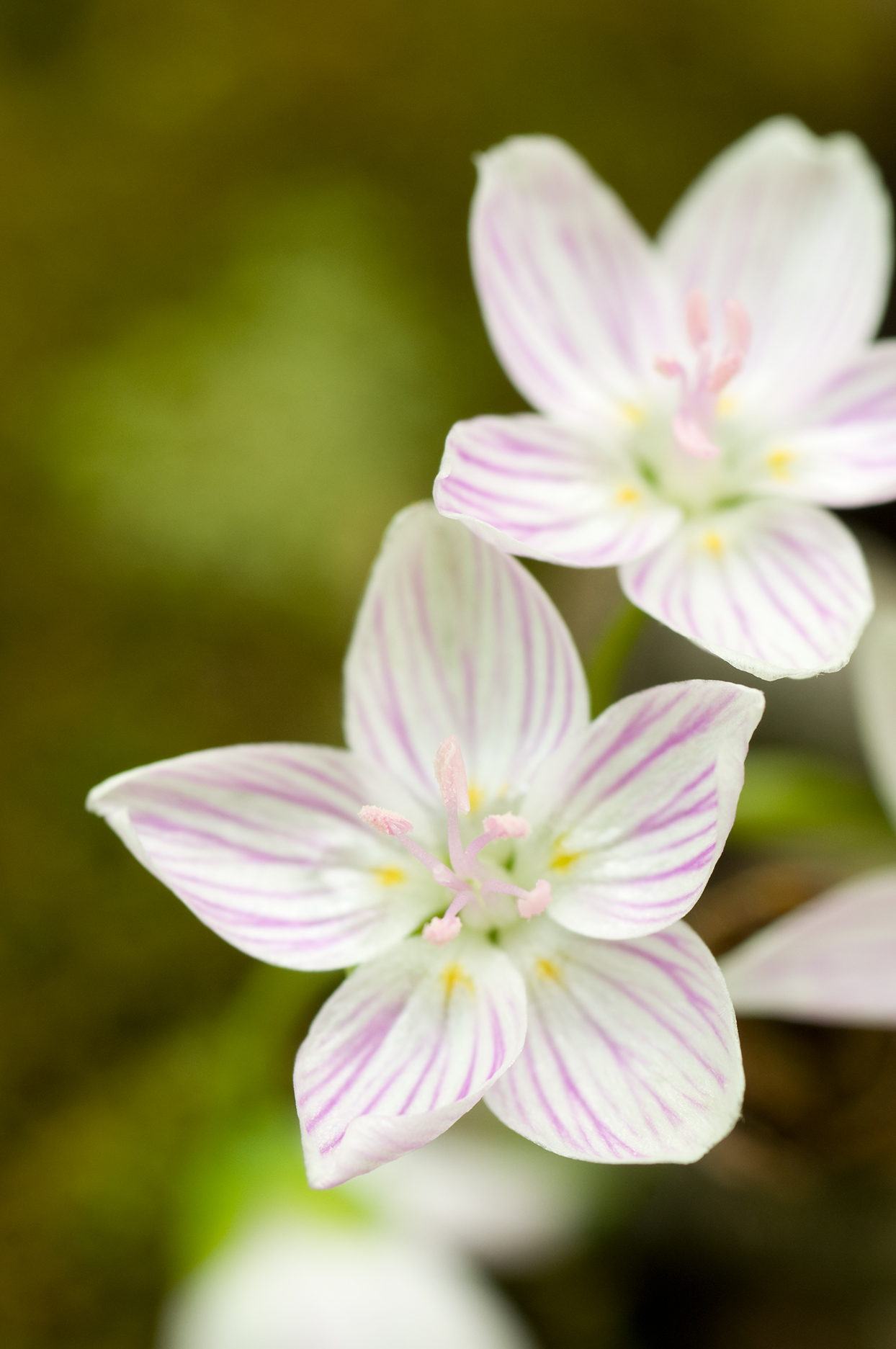 19 Early Blooming Spring Flowers For Your Garden Better Homes