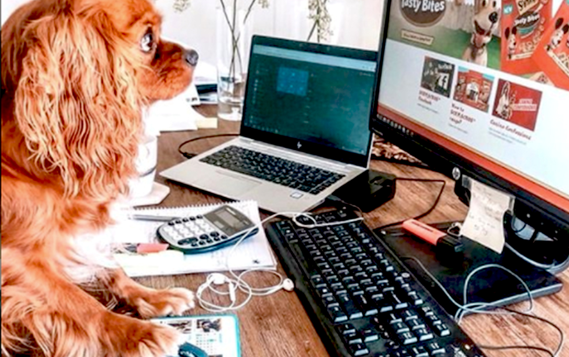 Dog at a desk pretending to be working on a computer