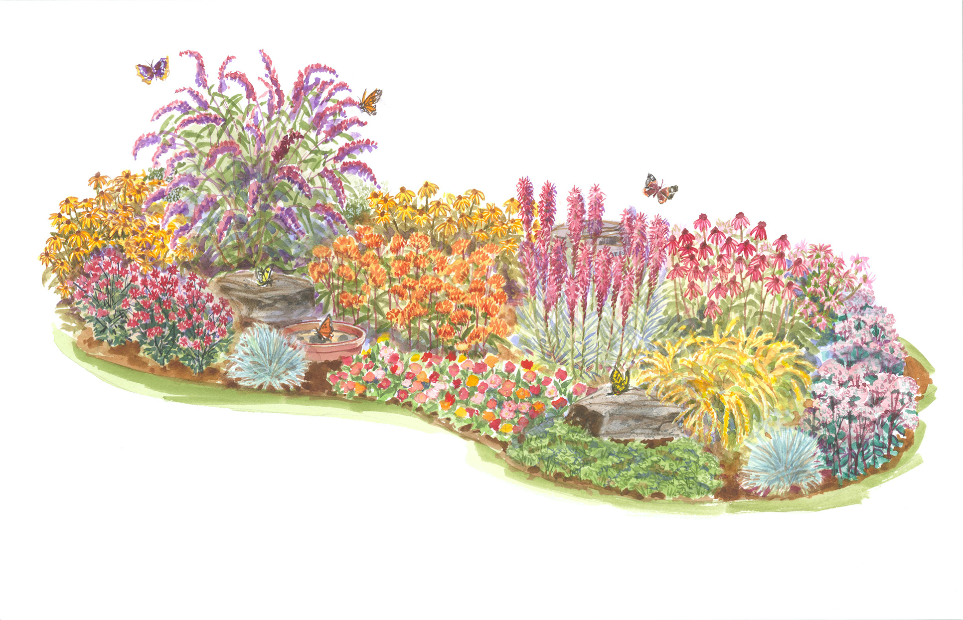 butterfly garden plan illustration