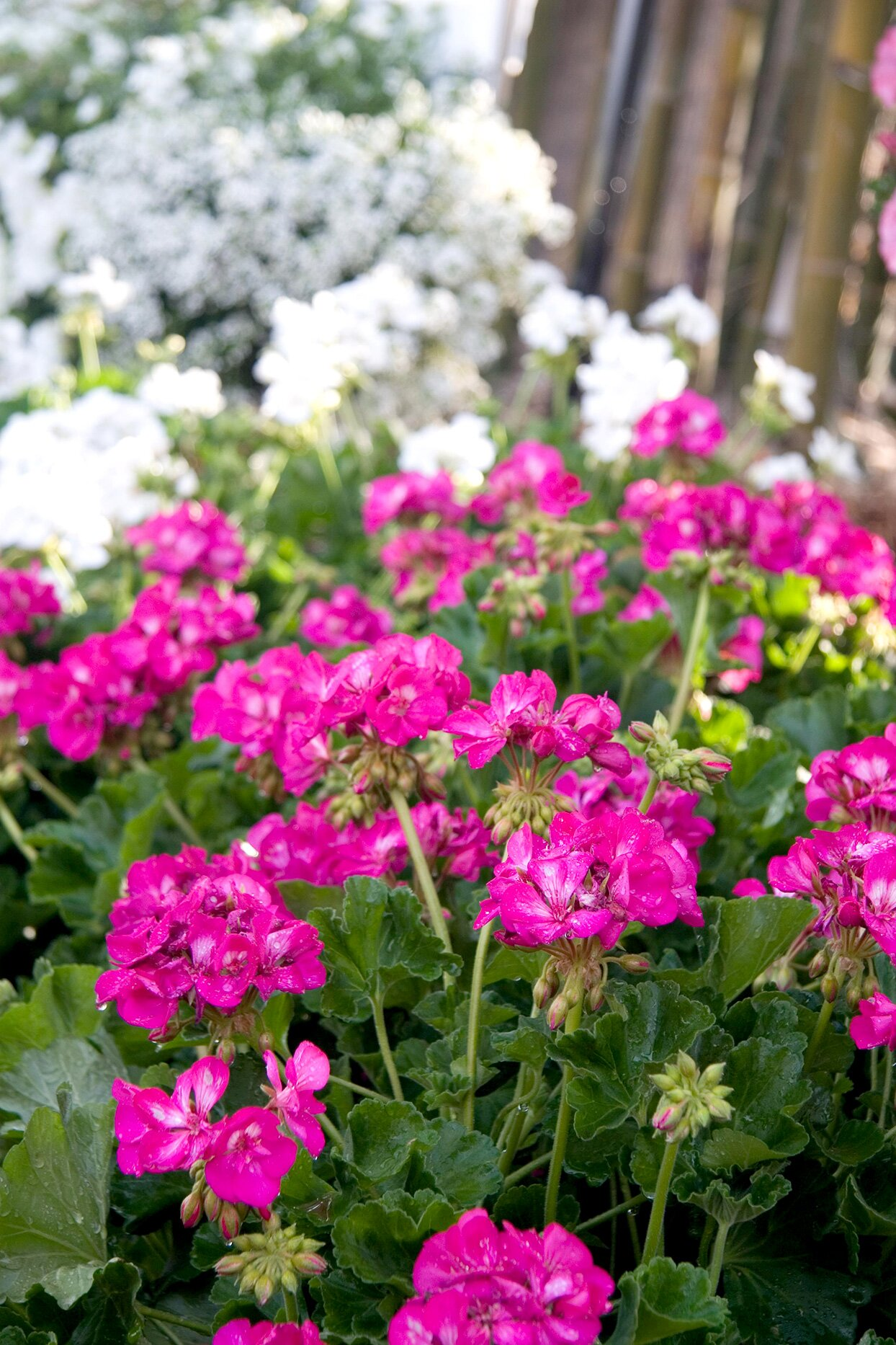 Easy Plants To Grow Outside Better Homes Gardens