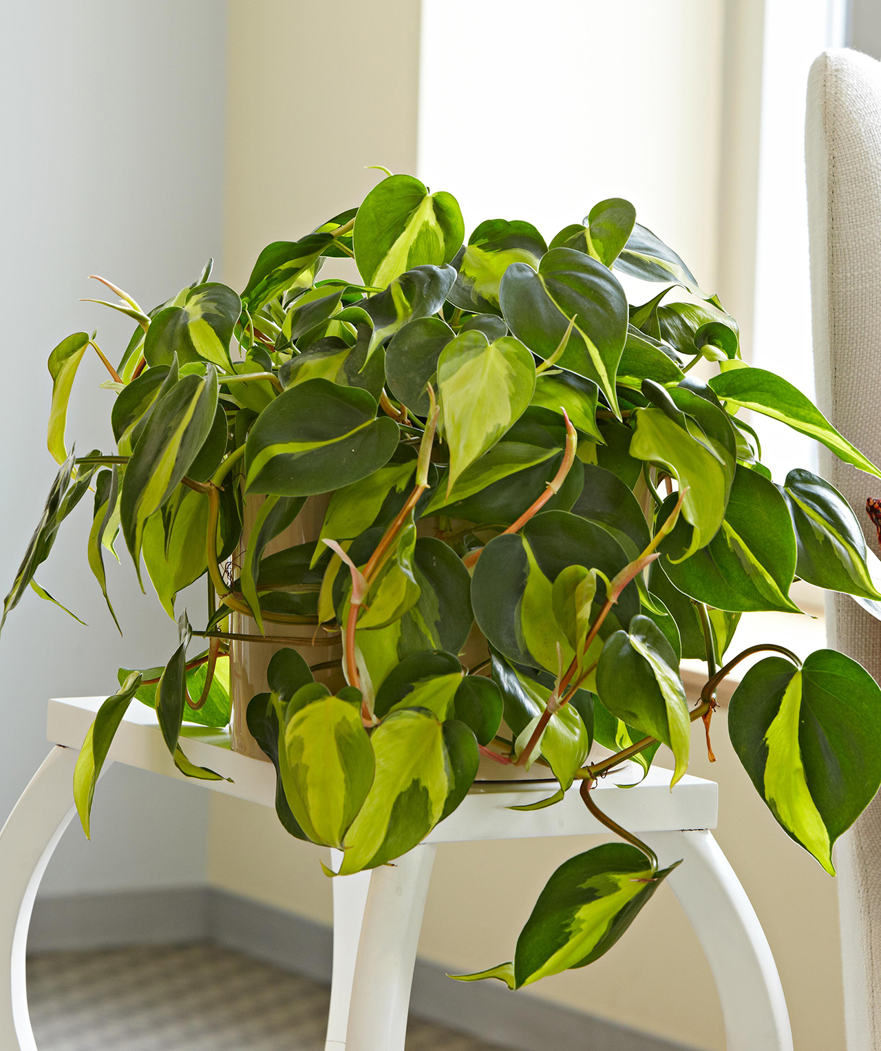 20 Plants that Will Grow Better in Your Bathroom   Better Homes ...