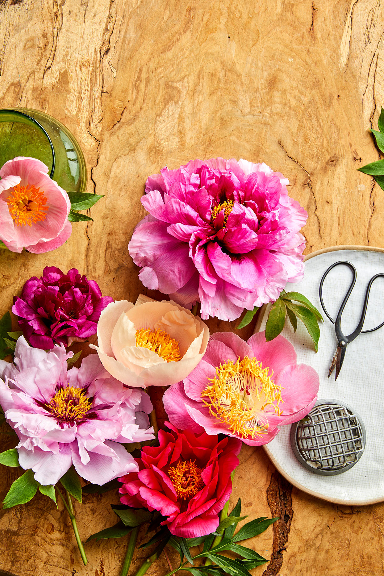 cut pink Peonies on table