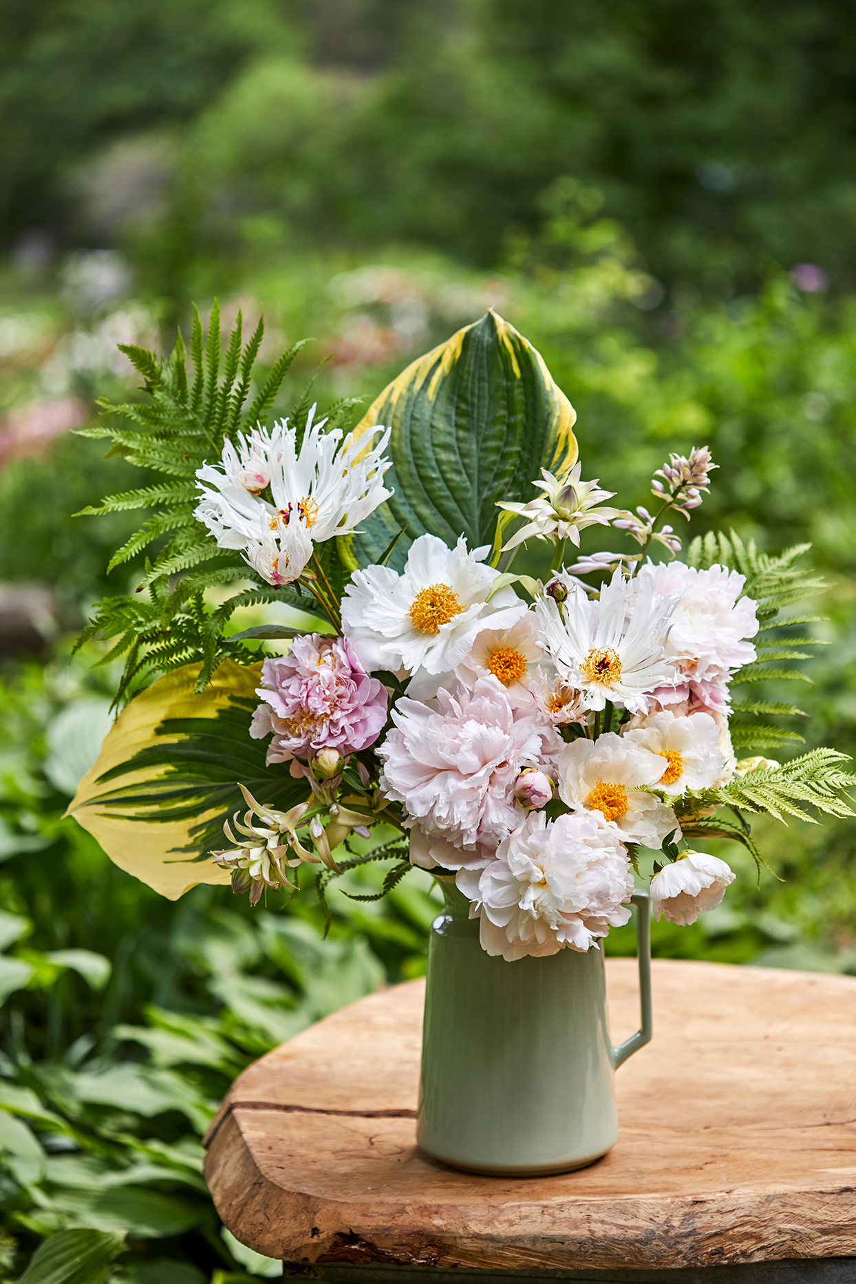 white and pink Peonies in pitcher vase