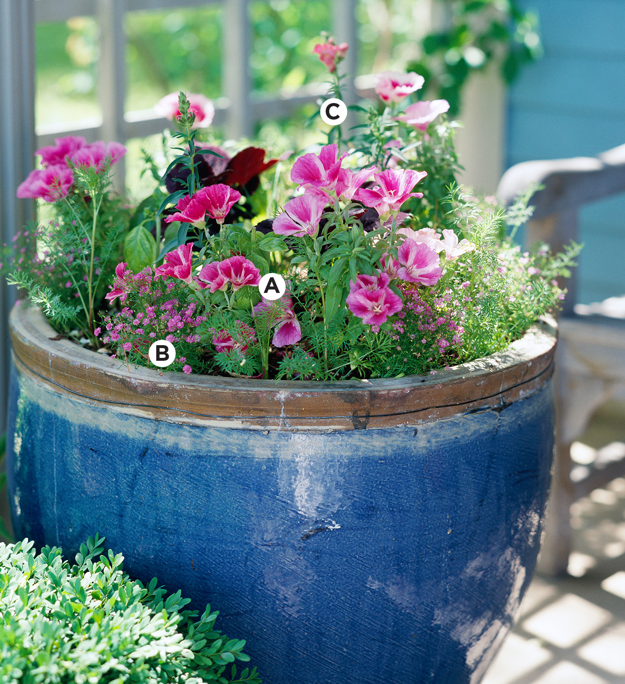 blue container with godetia, verbena, snapdragon