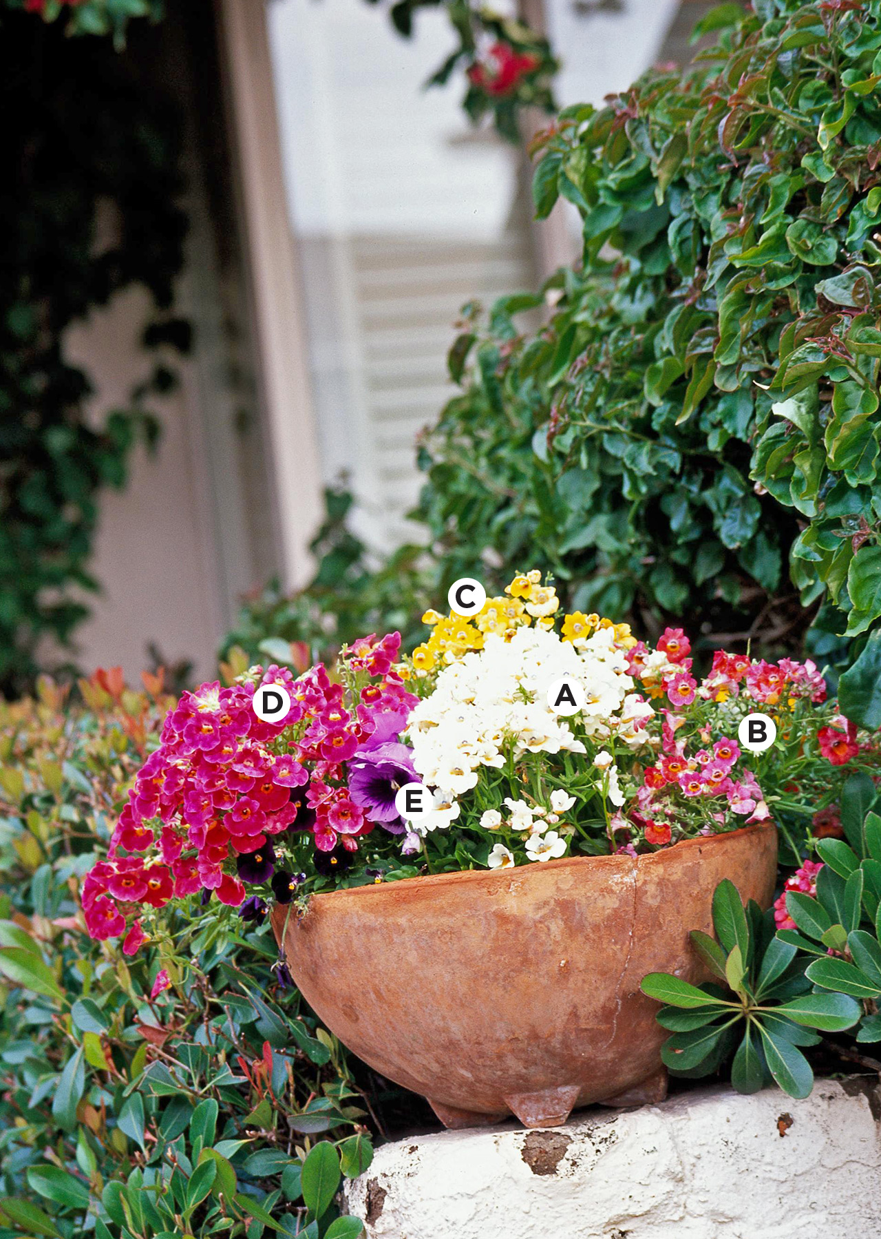 bowl container with nemesias, pansy