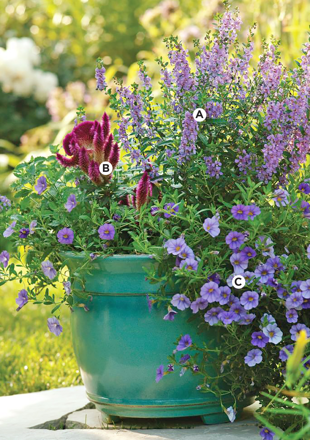green container with angelonia, celosia, calibrchoa