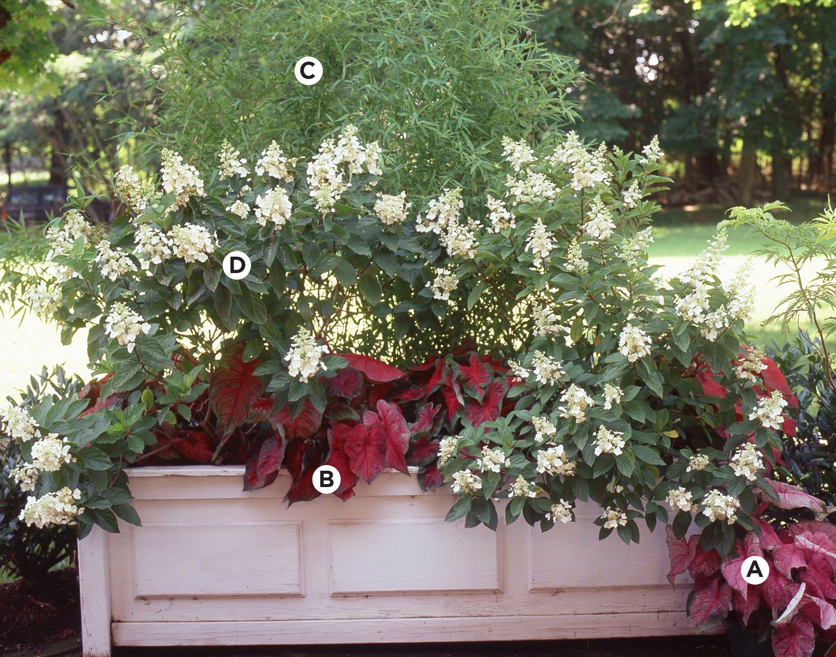 stately planter with shrubs and bulbs