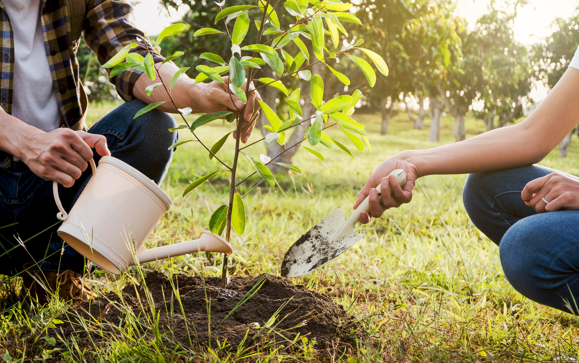Two people planting a new tree in a yard