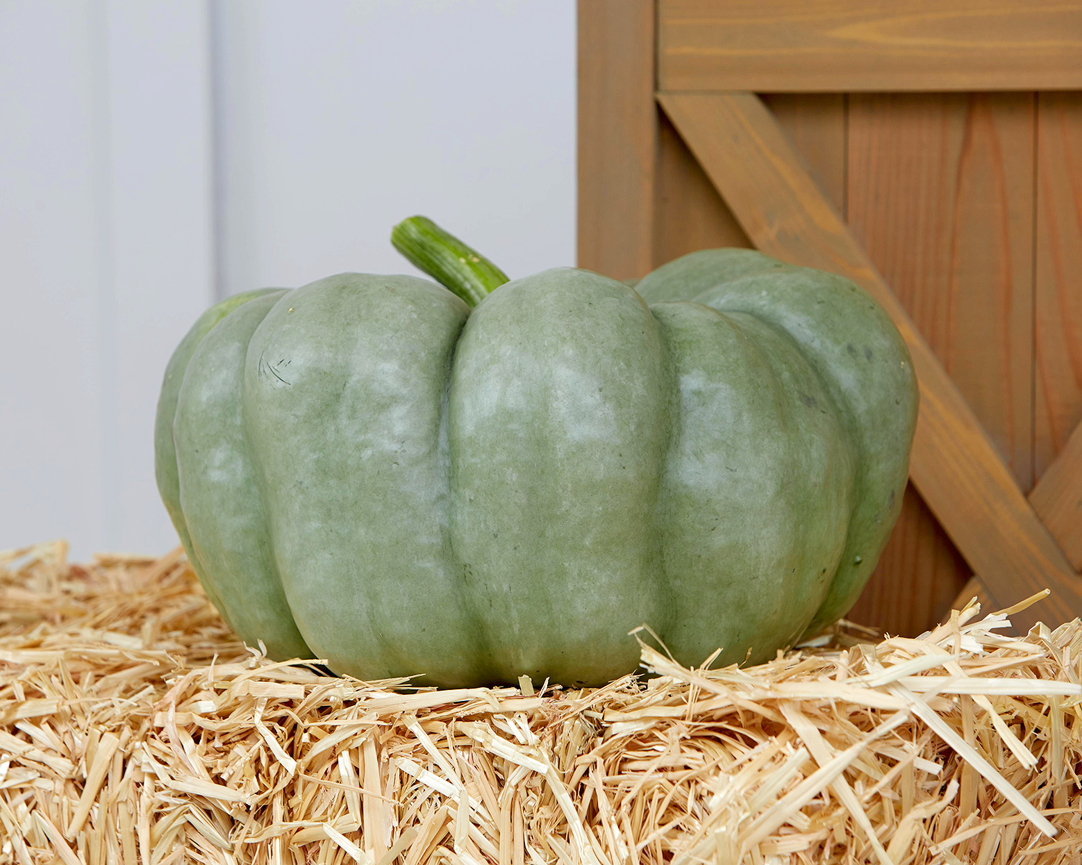 green 'blue doll' pumpkin variety on straw