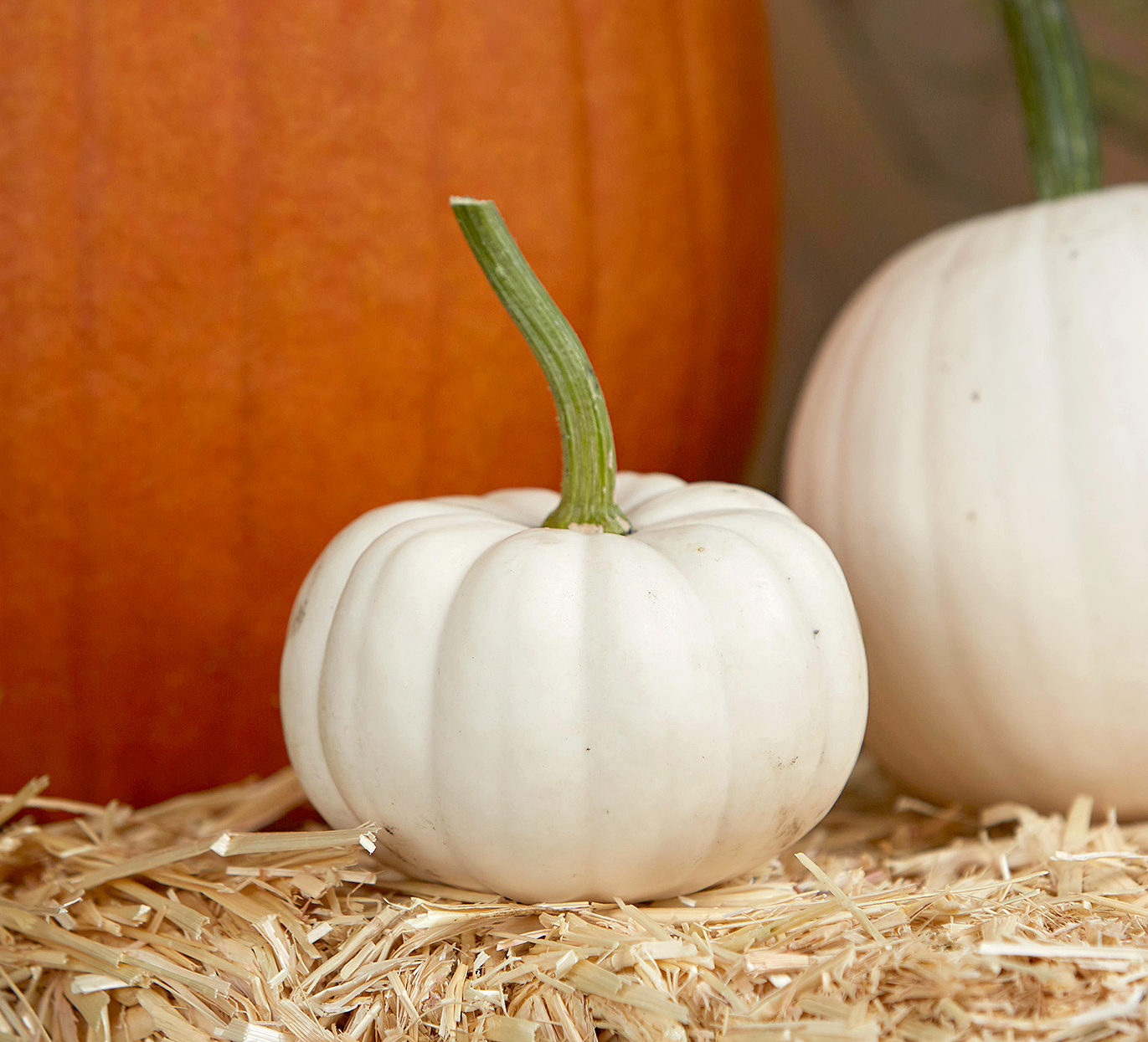 small white 'casperita' pumpkin on straw