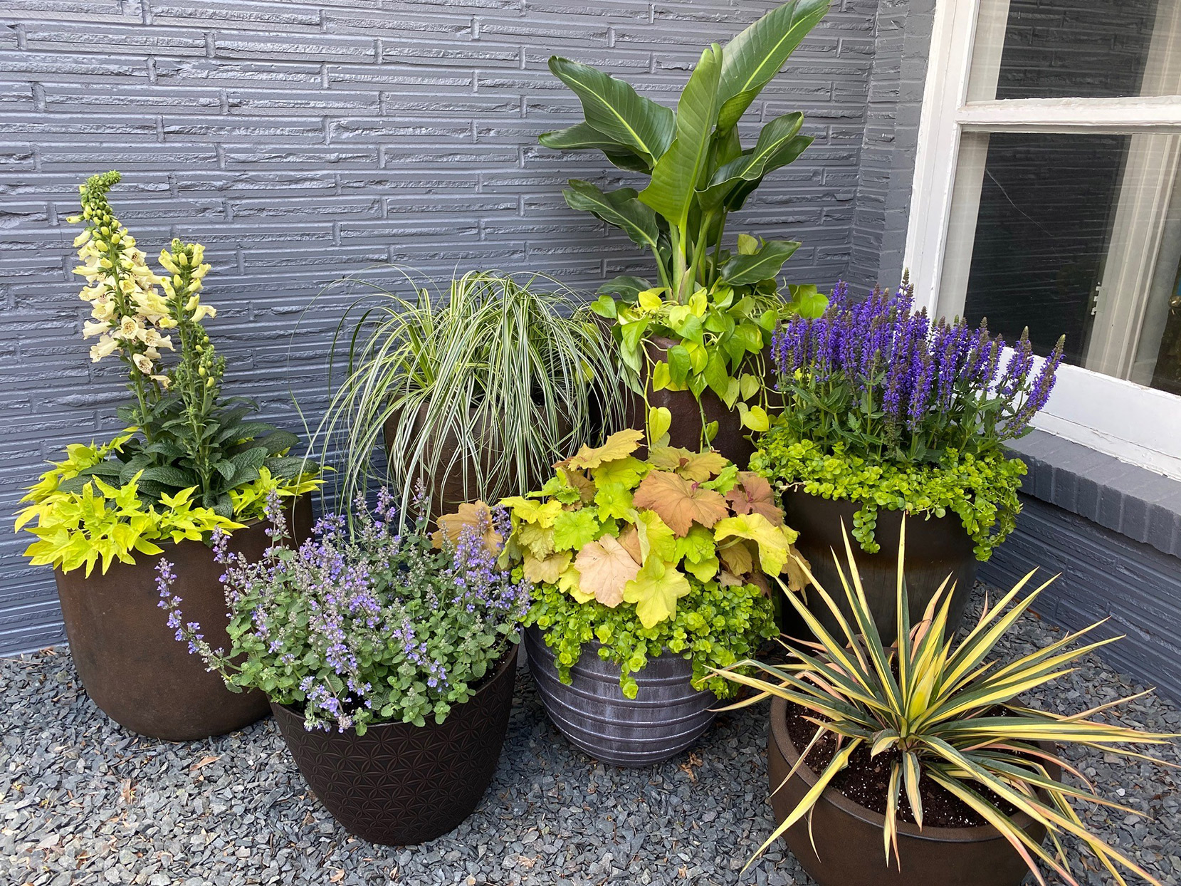mix of plants in container garden grouping