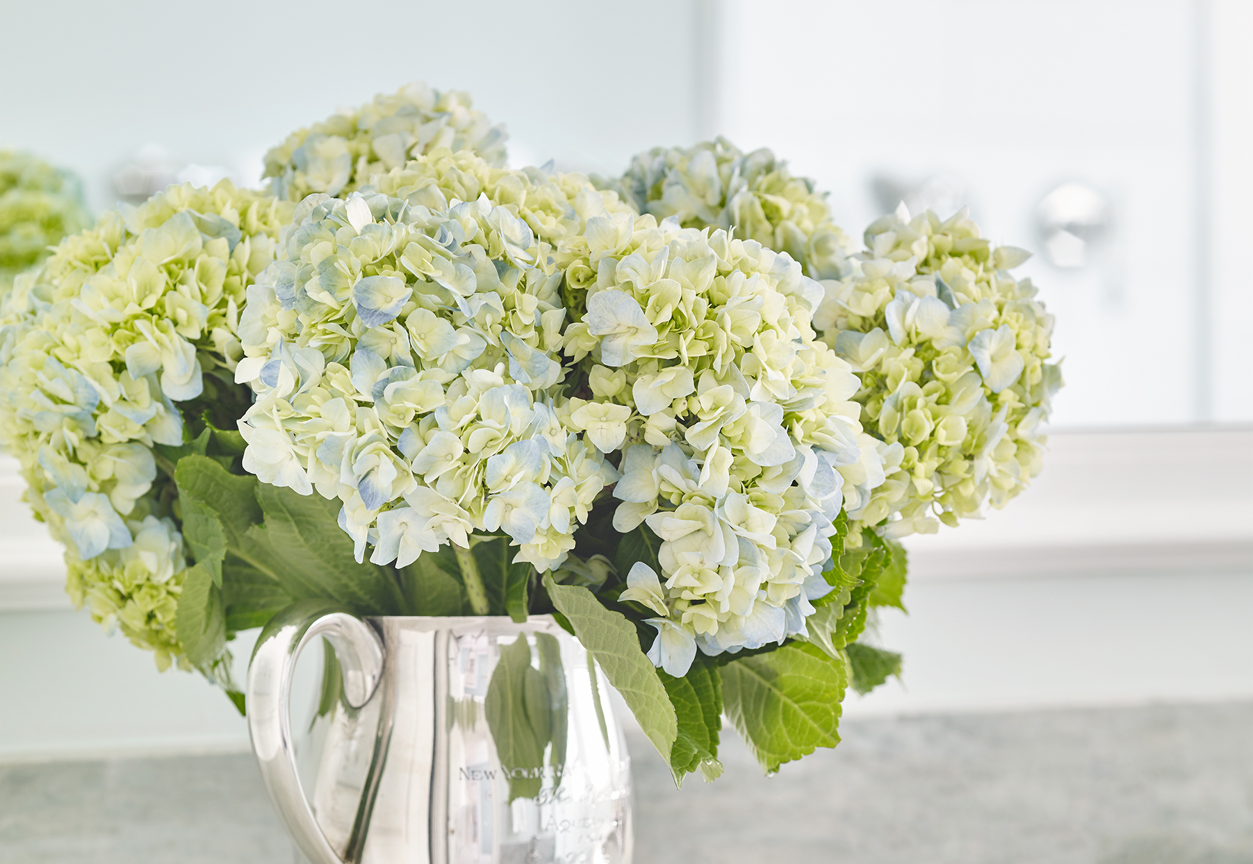 Cut Hydrangeas Wilting Use This Simple Trick To Revive Your Blooms Better Homes Gardens