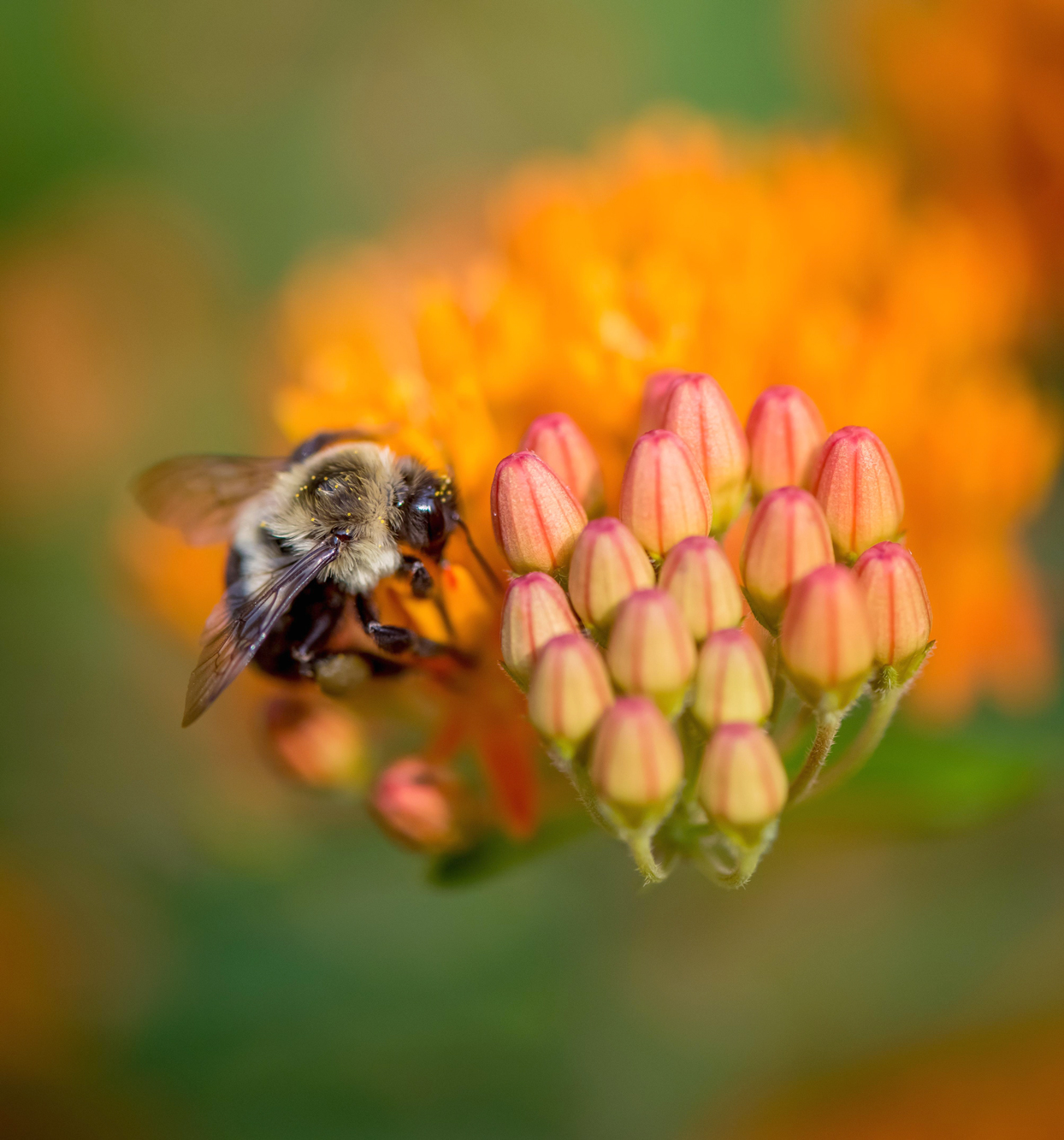 close up of bee on flower buds