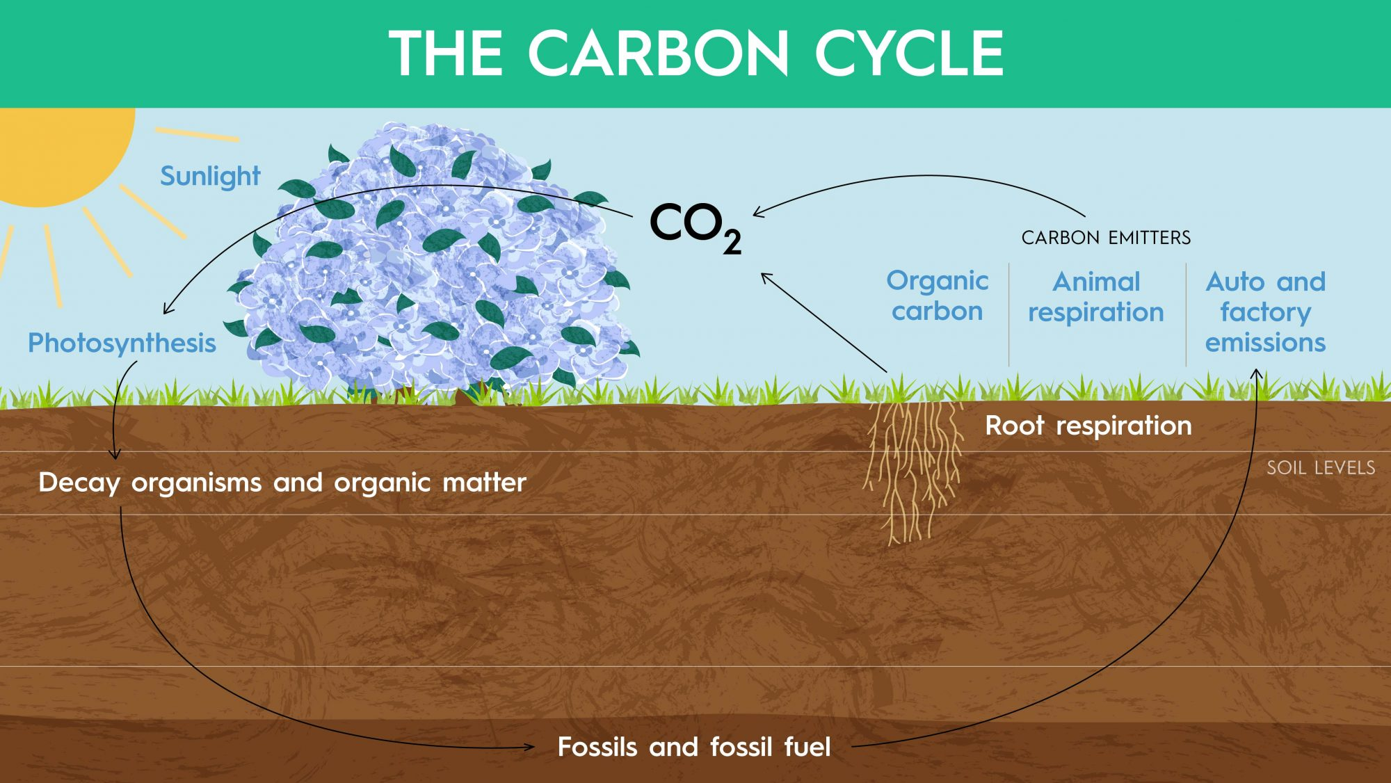 illustration of carbon cycle with sun, plants, soil
