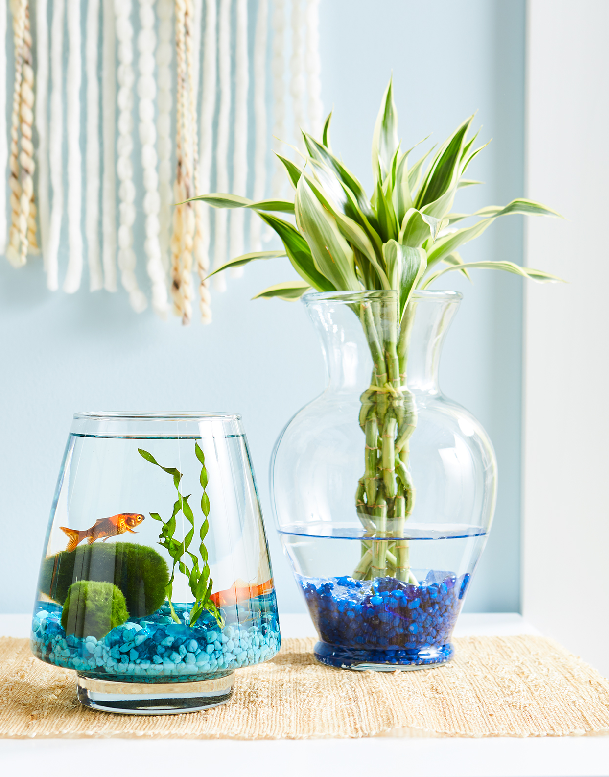 lucky bamboo plant next to goldfish