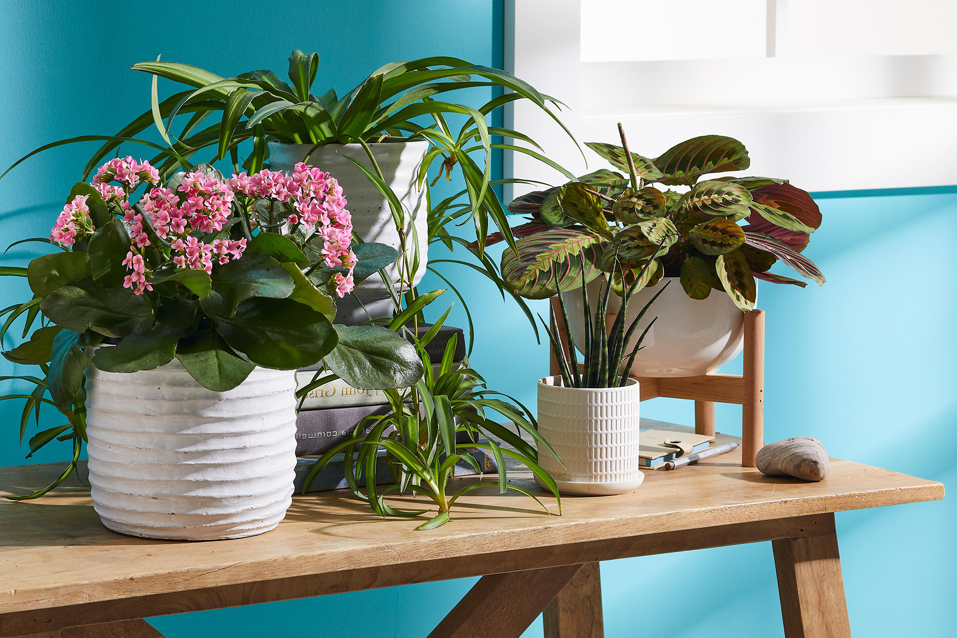 houseplants on side table