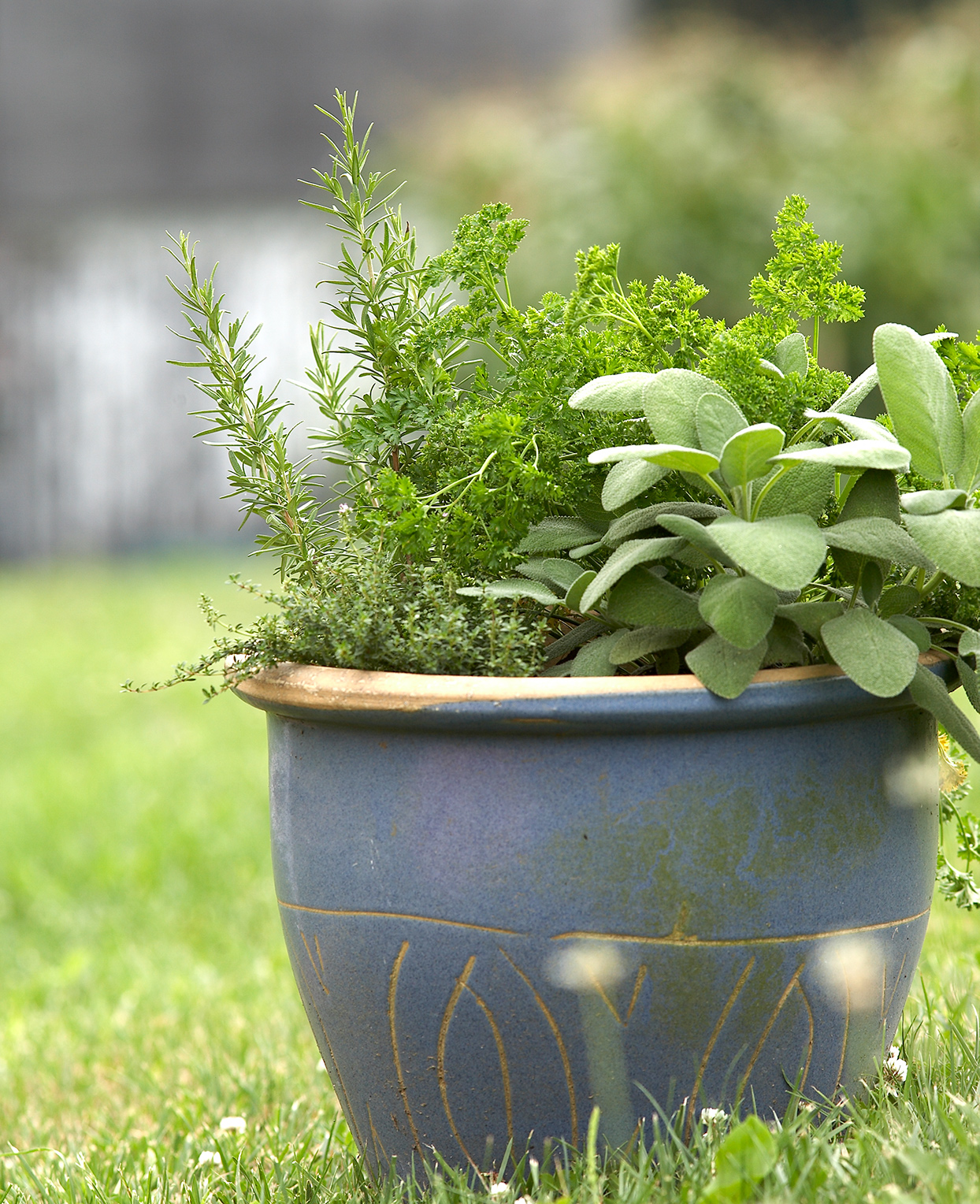herbs growing in planter including sage and rosemary