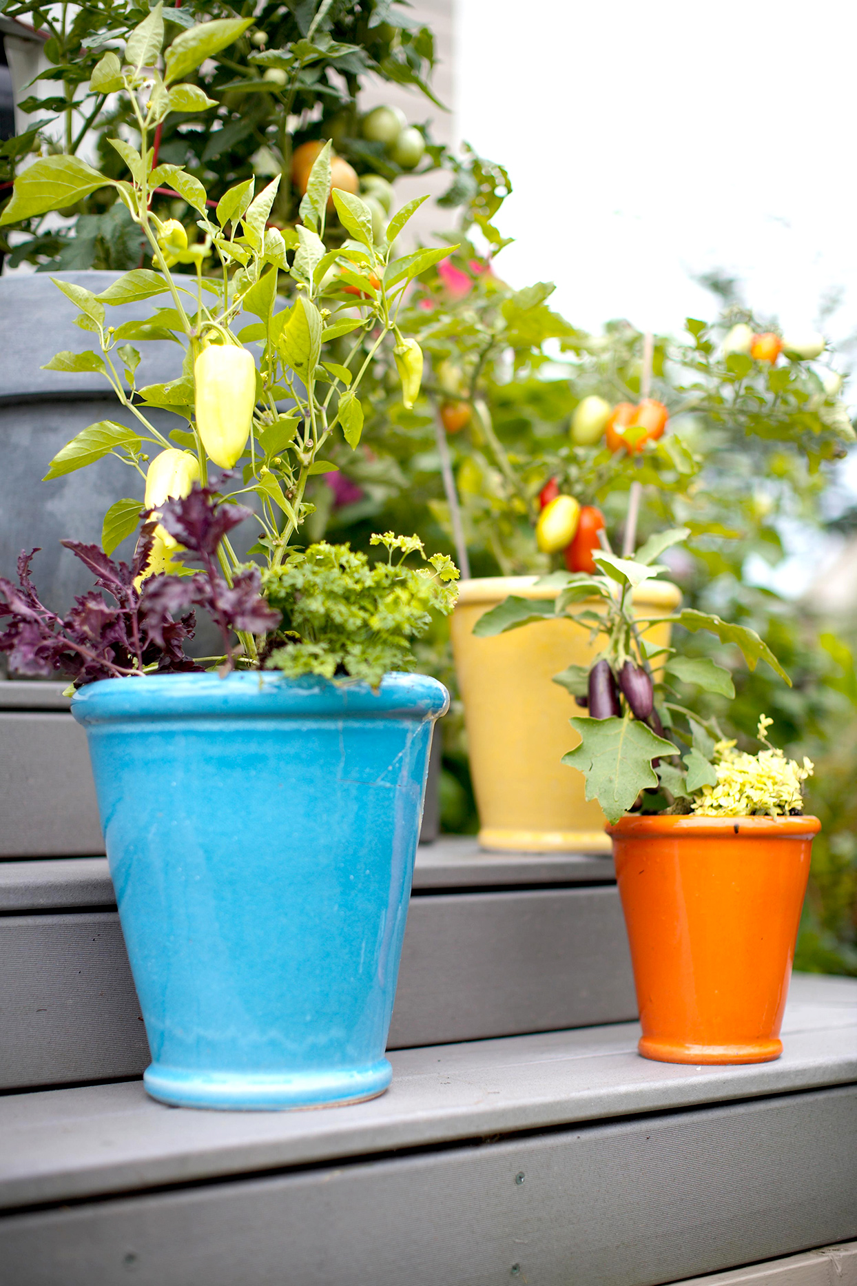pots with plants on steps