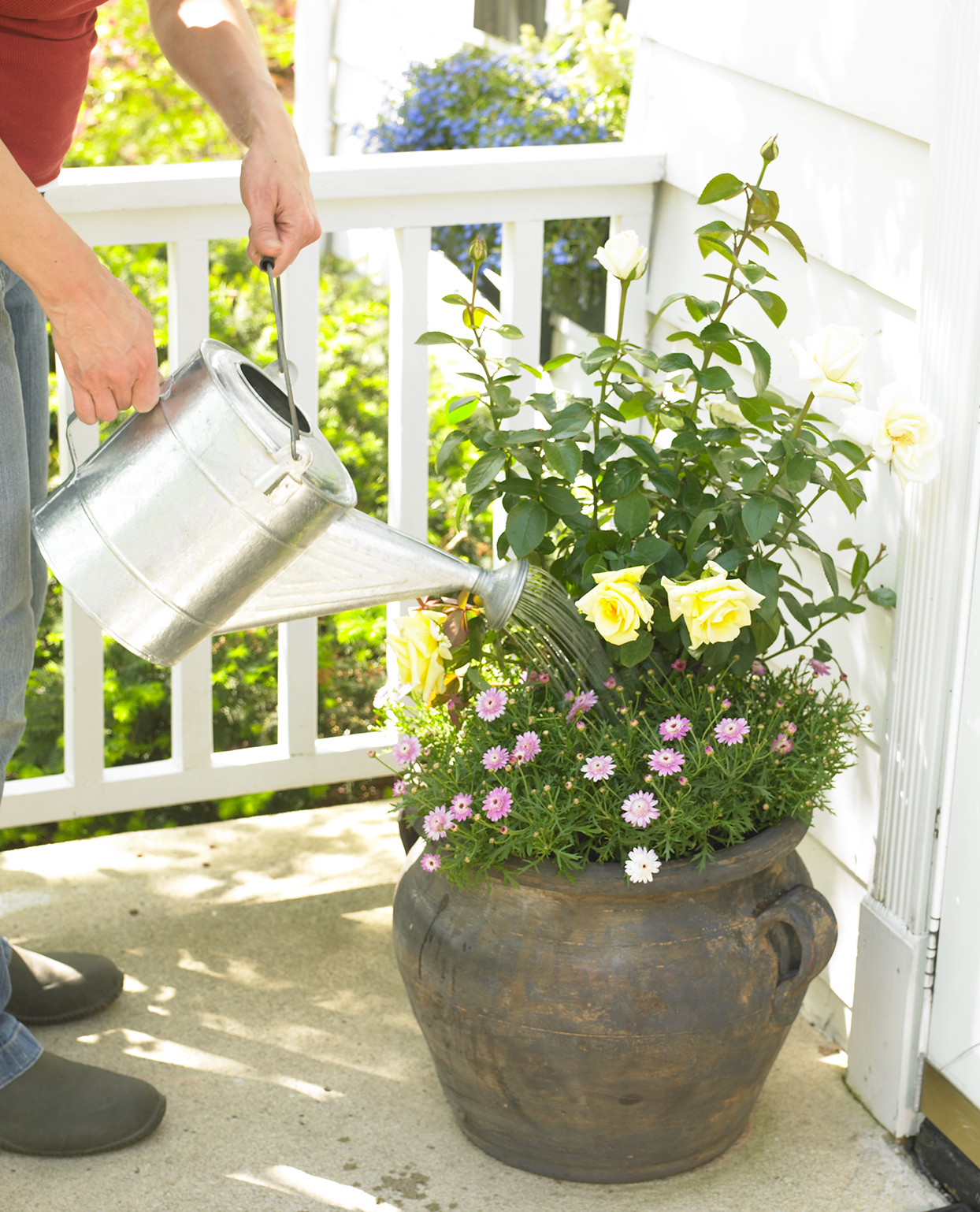 watering potted roses on porch