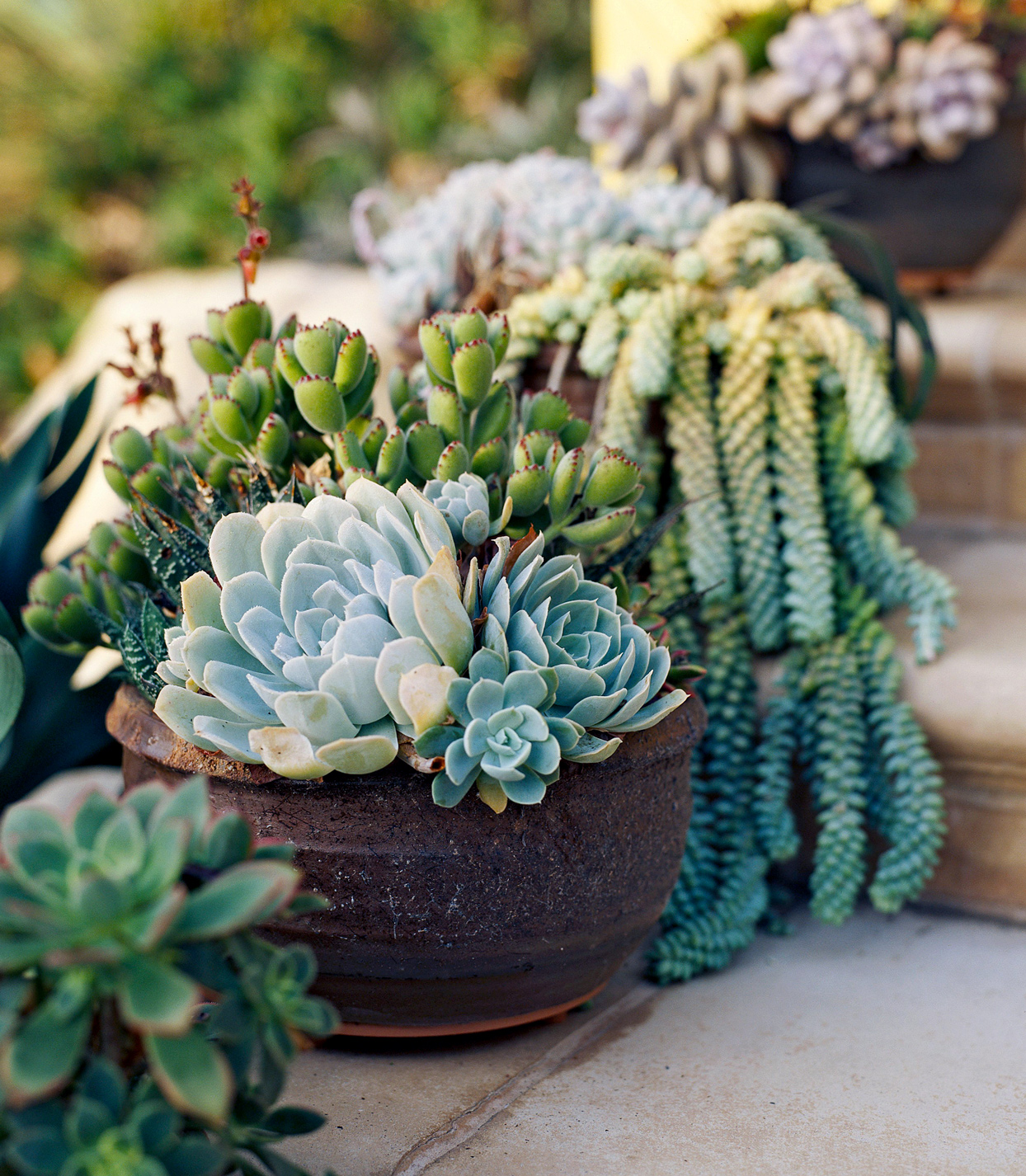 containers of succulents on entry steps