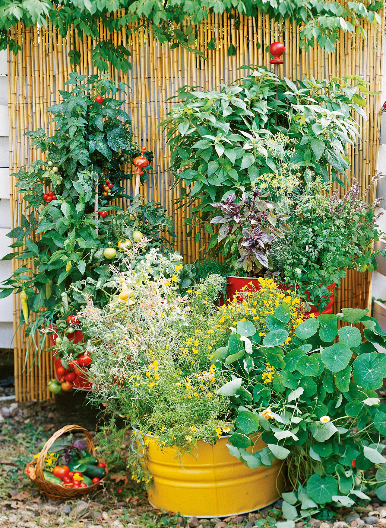 colorful plants in front of bamboo screen