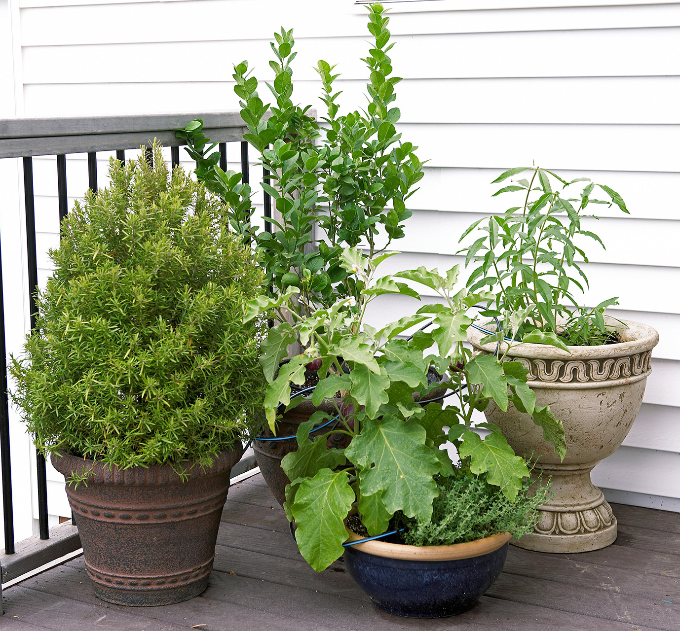 multi-textured plants in containers on deck