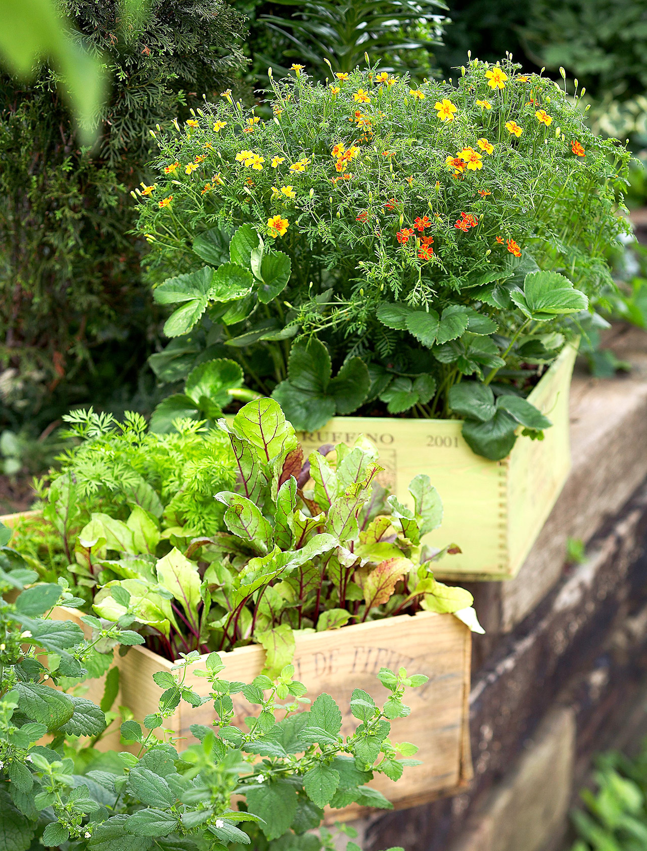 wine crates planted with flowers and vegetables