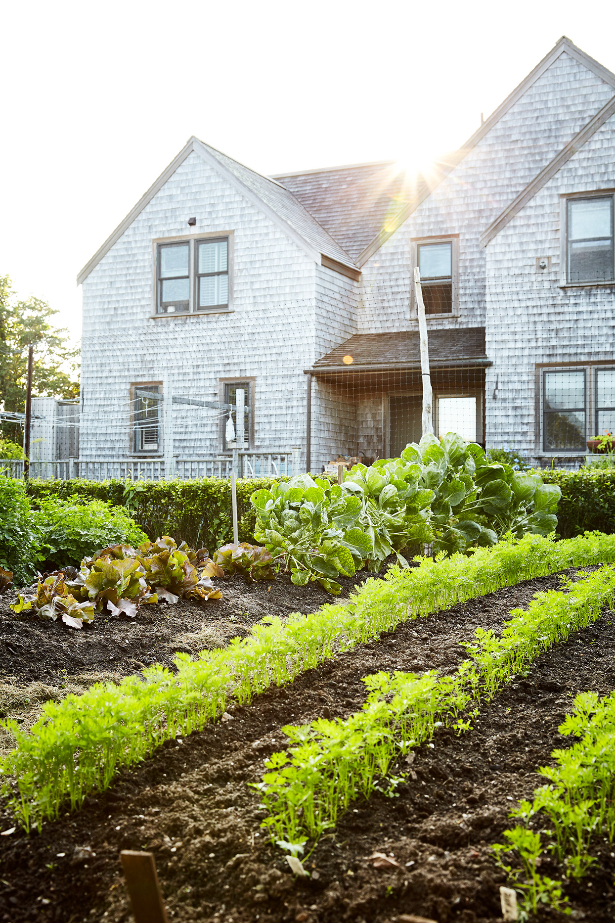 vegetable garden planted in rows by farm house