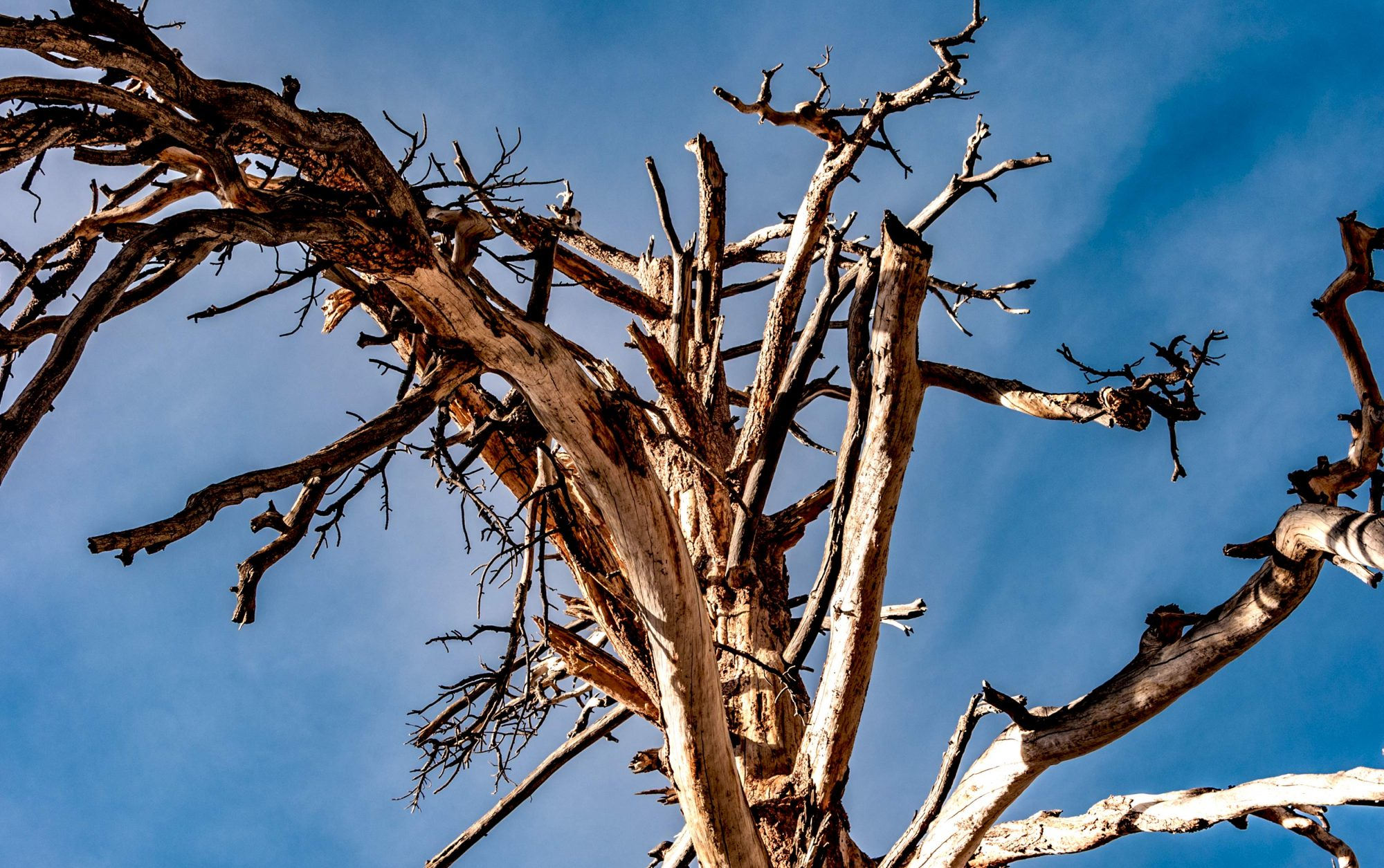 dead tree with blue sky behind it